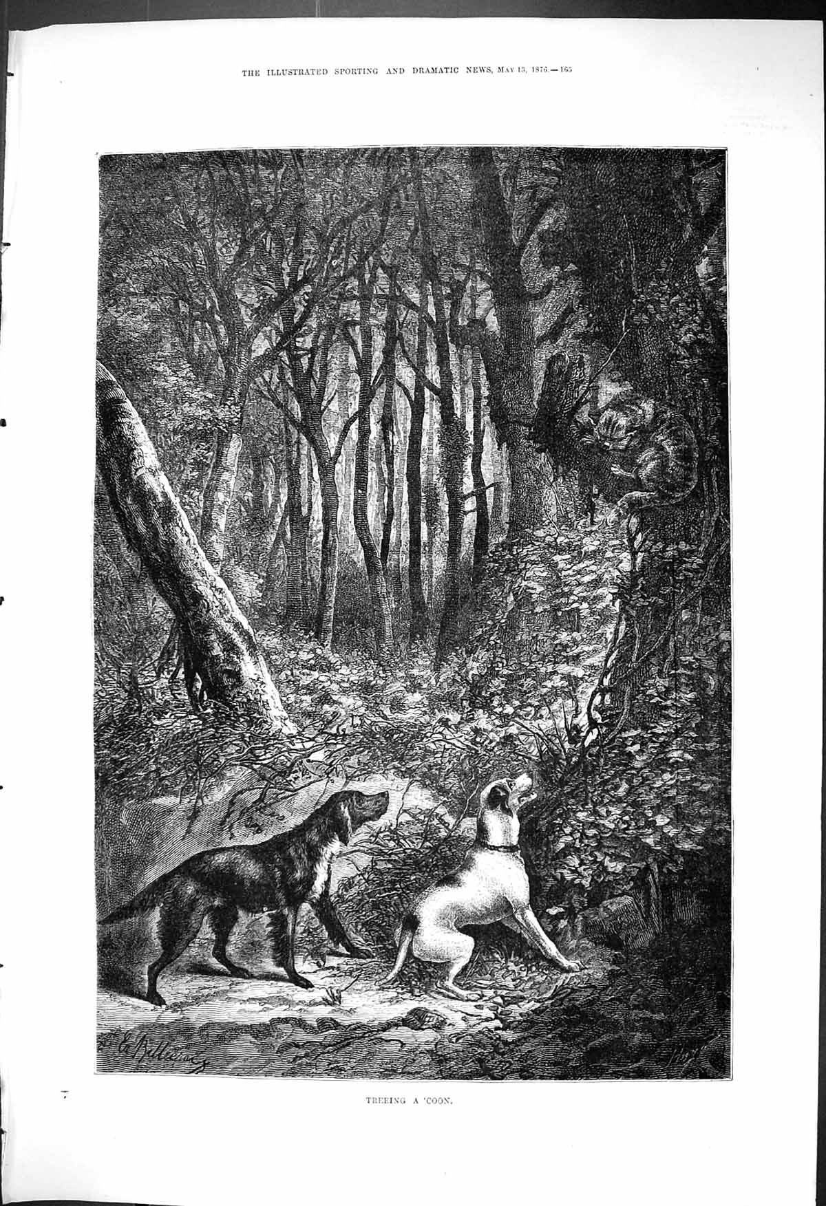 [Print 1876 Treeing A 'Coon Dogs Chasing Cat Up A Tree Forest Scene 165J405 Old Original]