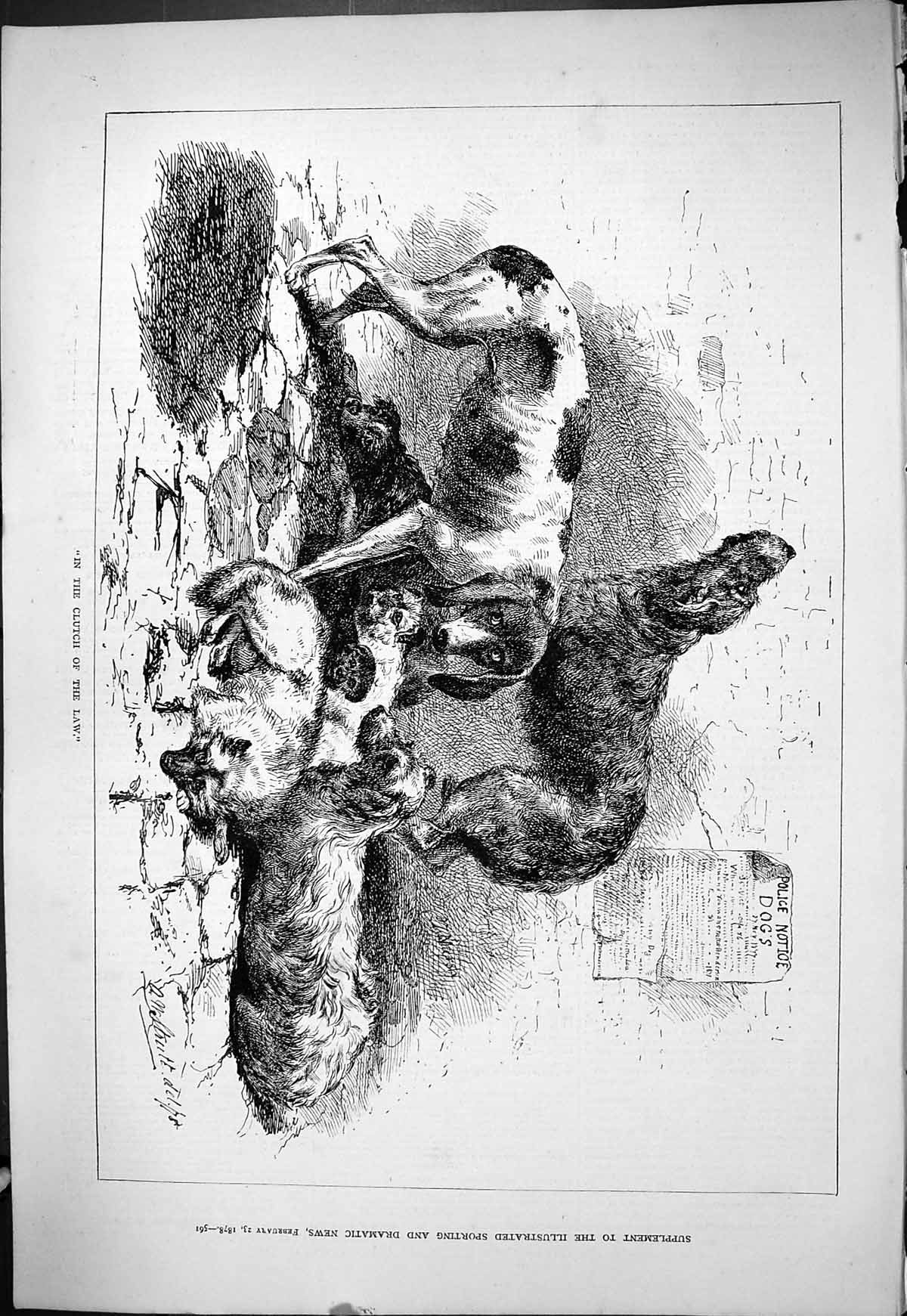 [Print 1878 Clutch Law Hunting Dogs Puppies Animals 561J408 Old Original]