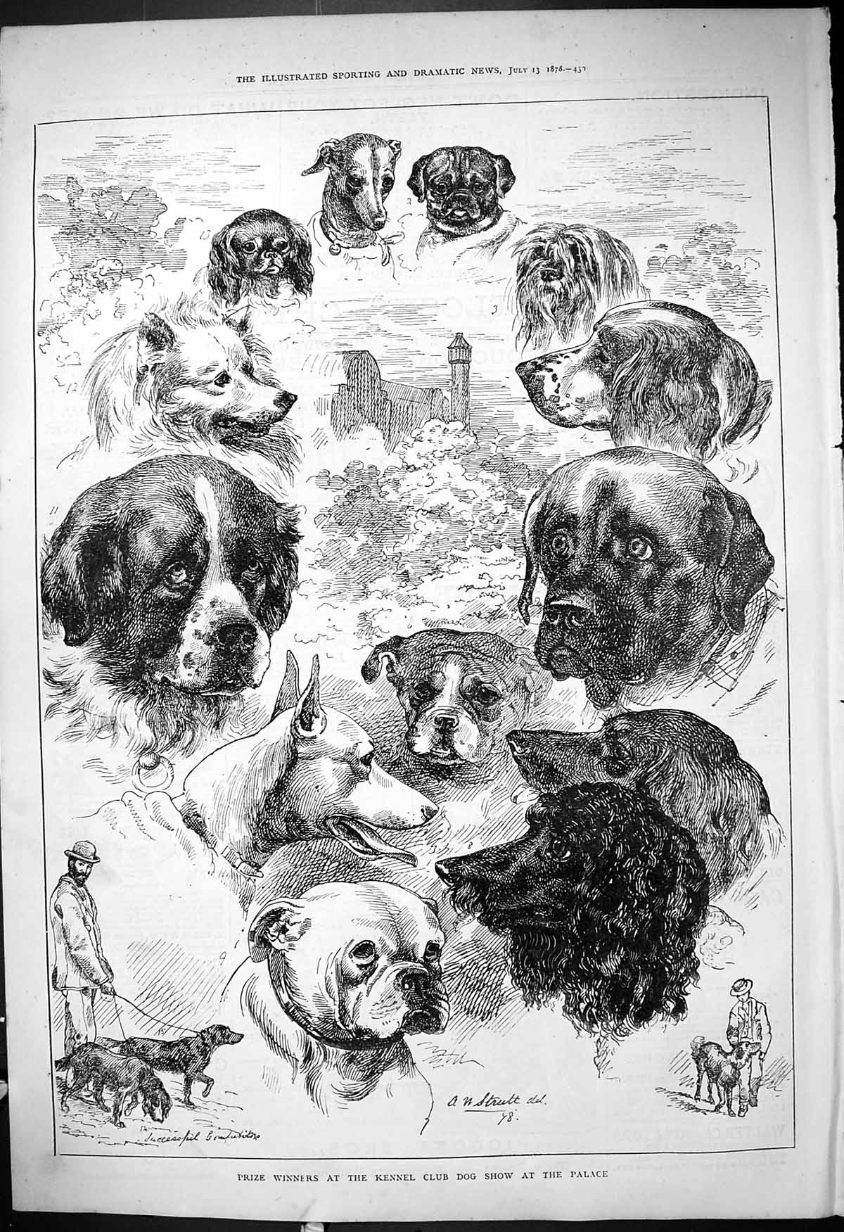 [Print Prize Winners Kennel Club Dog Show Crystal Palace Dogs 1878 430J409 Old Original]
