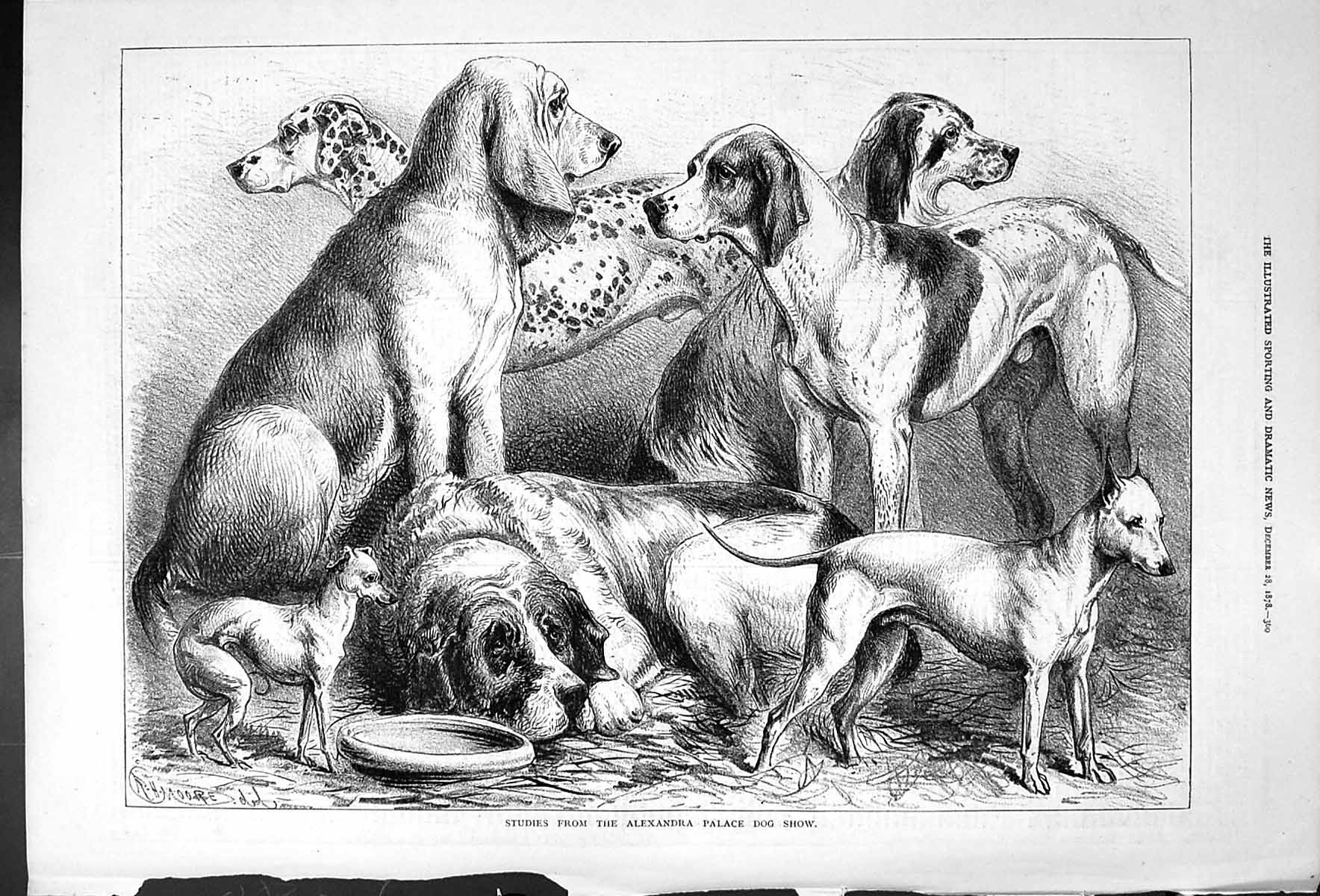 [Print Studies From The Alexandra Palace Dog Show Moore 1878 360J410 Old Original]