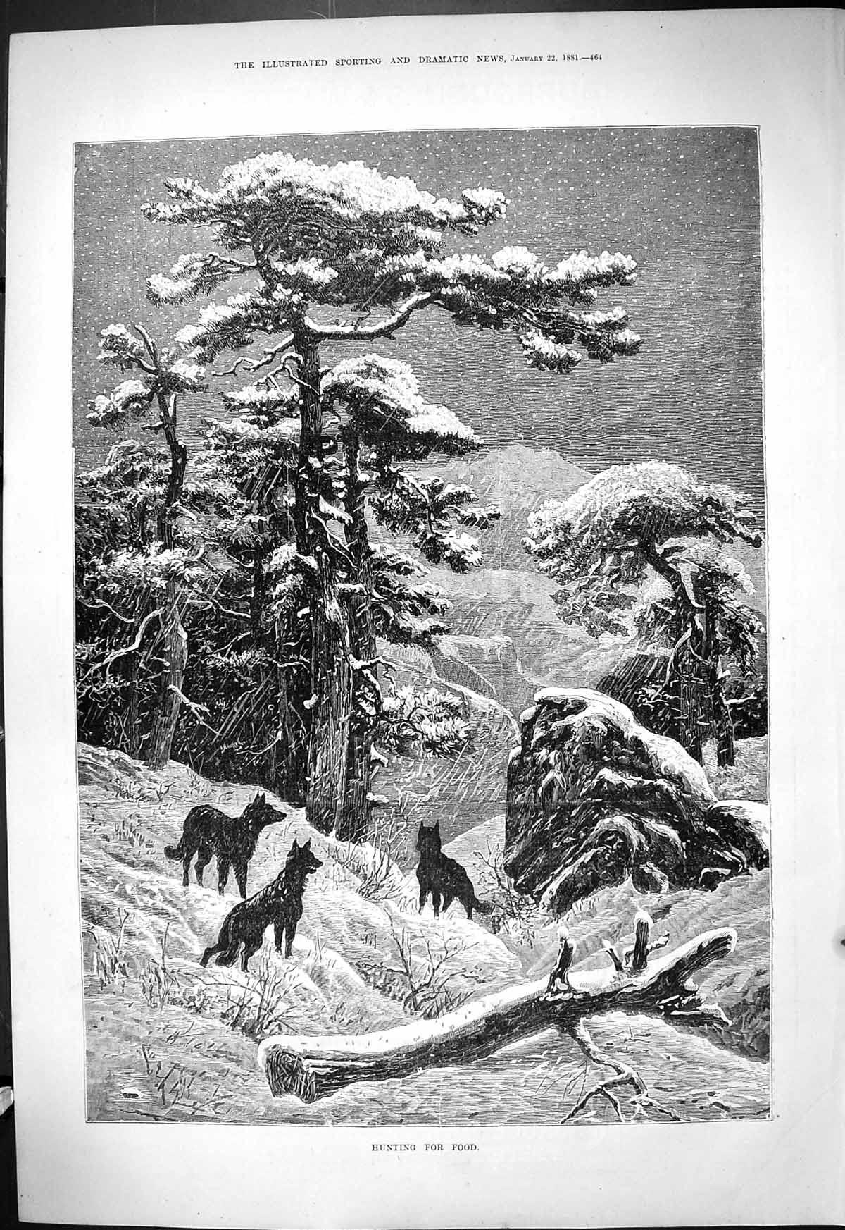 [Print 1881 Hunting For Food Wild Dogs Snow Mountains Fine Art 464J414 Old Original]