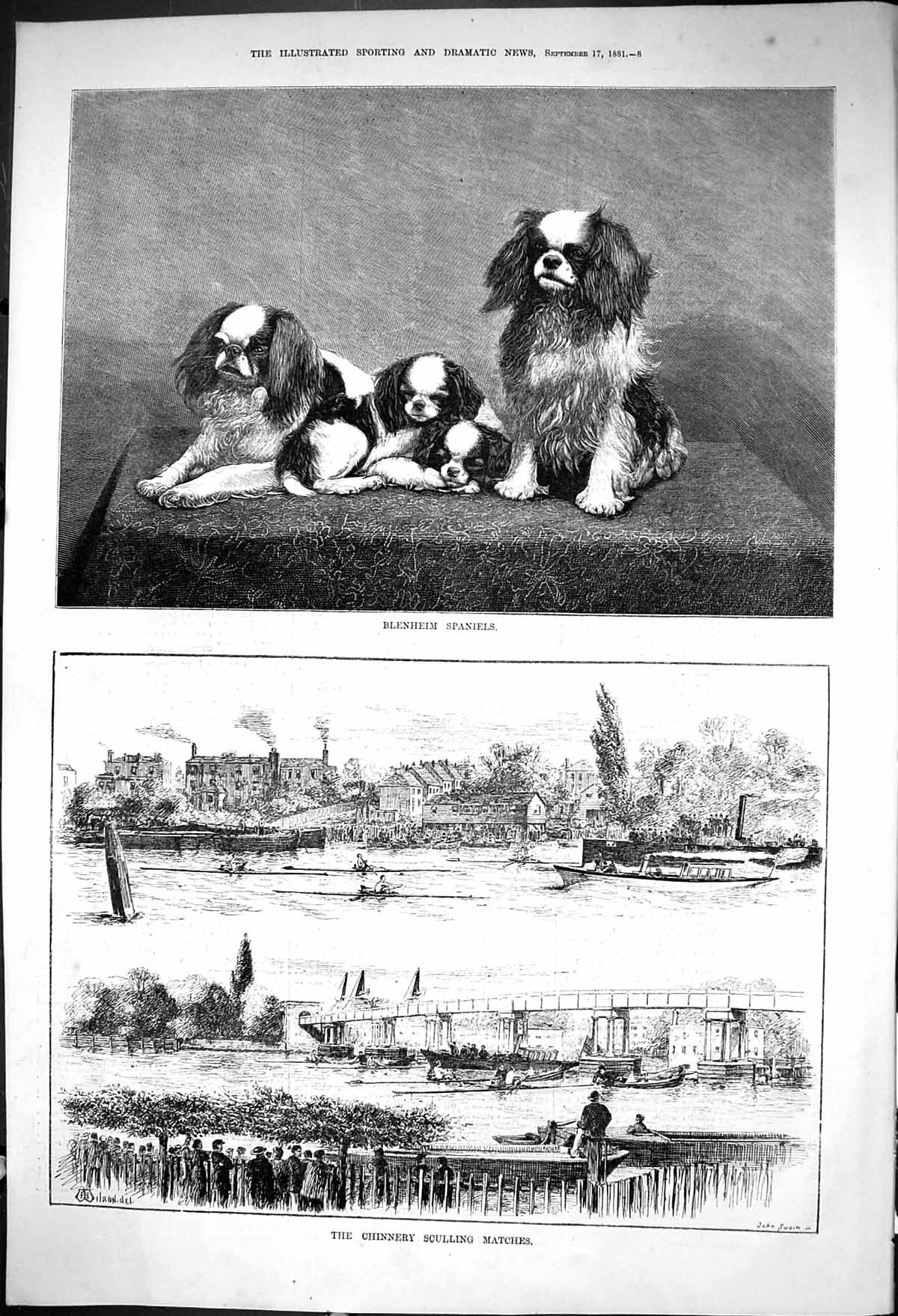 [Print 1881 Blenheim Spaniels Dogs Chinnery Sculling Matches Sport Boats 008J416 Old Original]