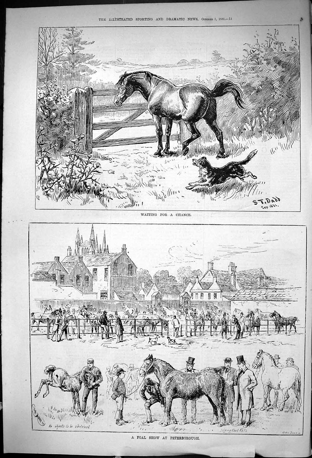 [Print 1881 Horses Foal Show Peterborough Waiting For A Chance Gate Dog 052J416 Old Original]
