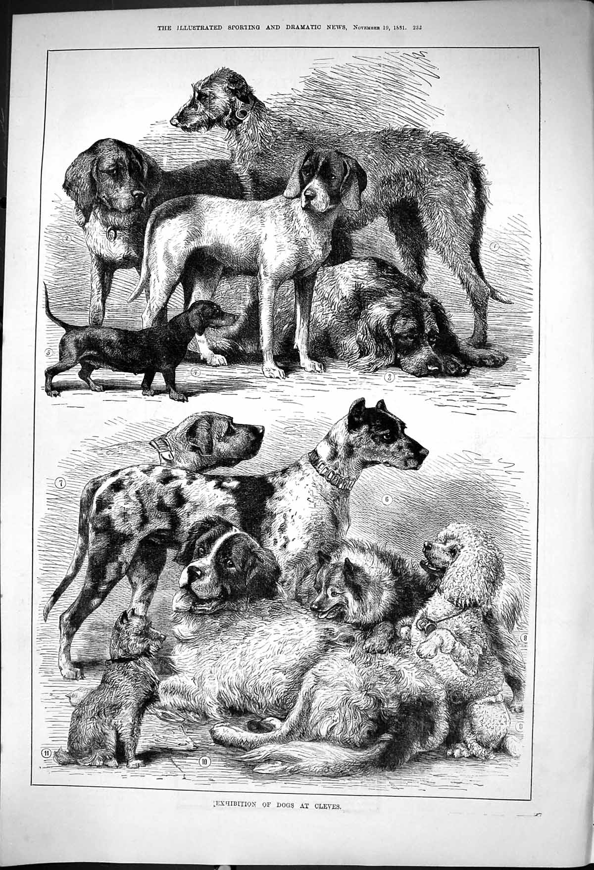 [Print 1881 Exhibition Dogs Cleves Animals 232J416 Old Original]