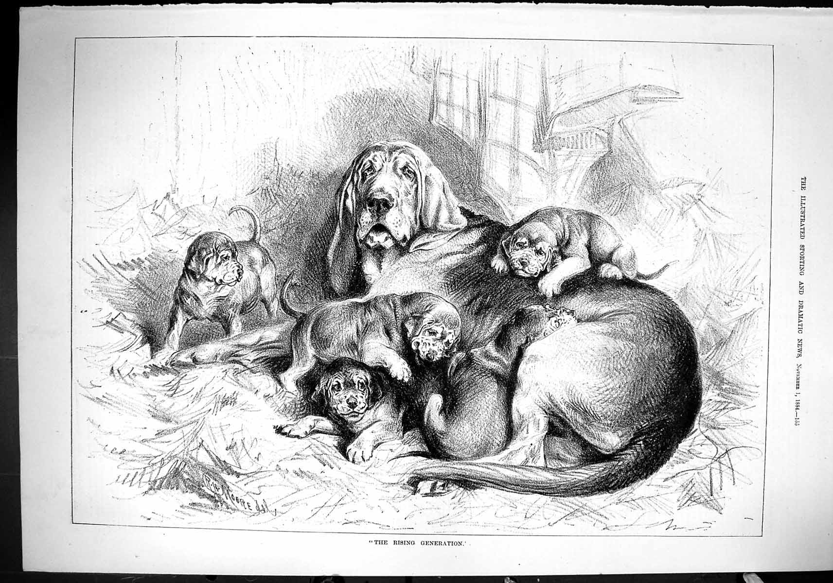 [Print 1884 Rising Generation Hounds Dogs Puppies Moore 155J422 Old Original]