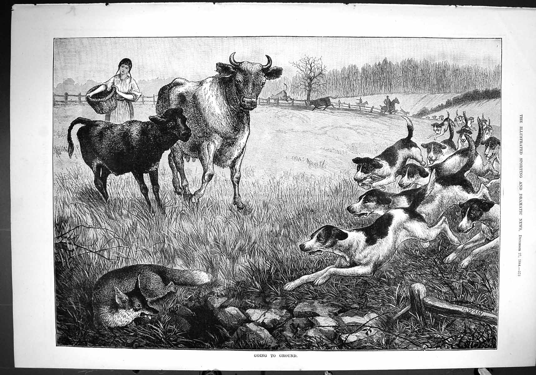 [Print 1884 Going To Ground Fox Hunting Hounds Dogs Cow Calf Farm Fine A 373J422 Old Original]