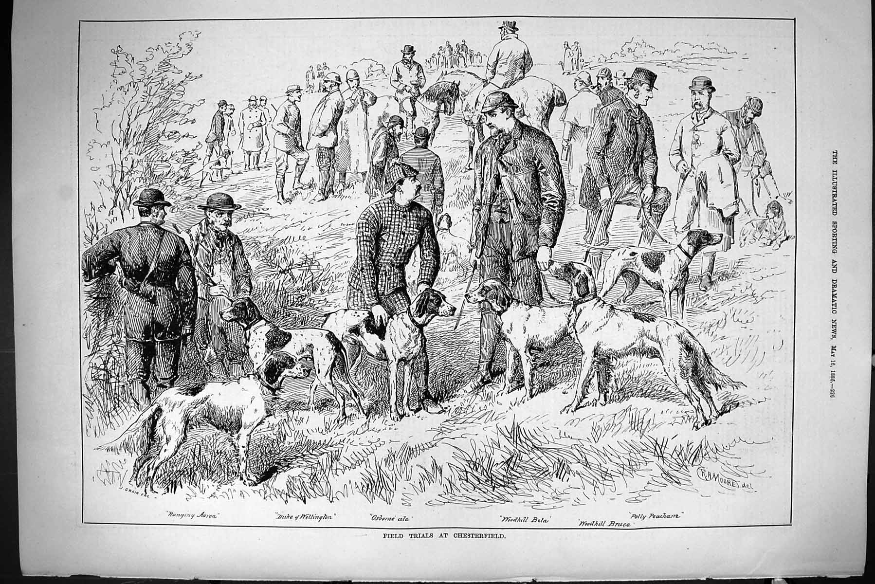 [Print 1885 Hunting Field Trials Chesterfield Dogs Beta Duke Wellington 226J423 Old Original]