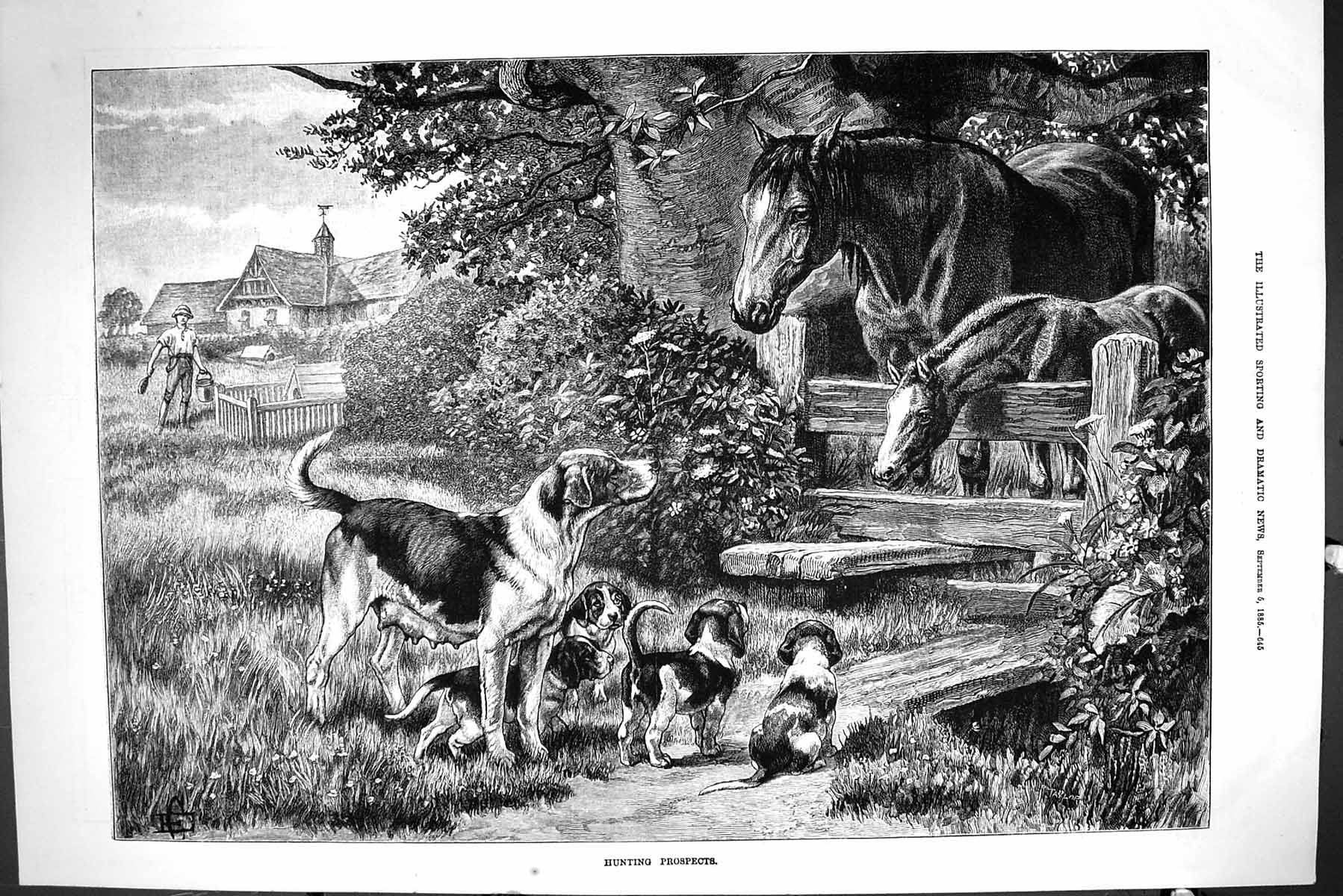 [Print Sporting Dramatic News 1885 Hunting Horses Hounds Dogs Puppies Fi 645J423 Old Original]