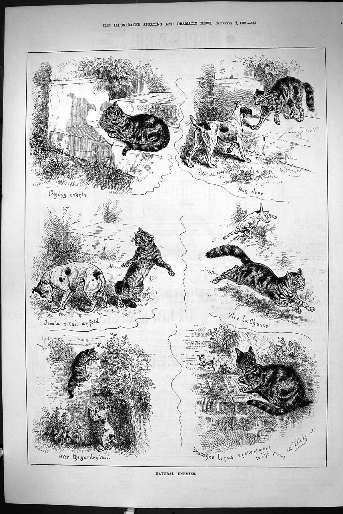 [Print Sporting Dramatic News 1885 Natural Enemies Cats Dogs Garden Wall 676J423 Old Original]