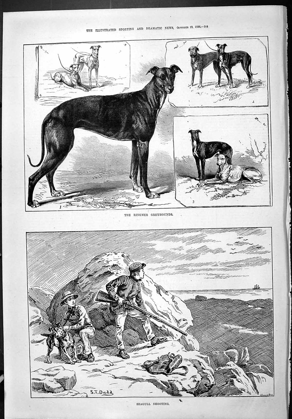[Print Sporting Dramatic News 1886 Ringmer Greyhounds Dogs Seagull Shoot 144J426 Old Original]