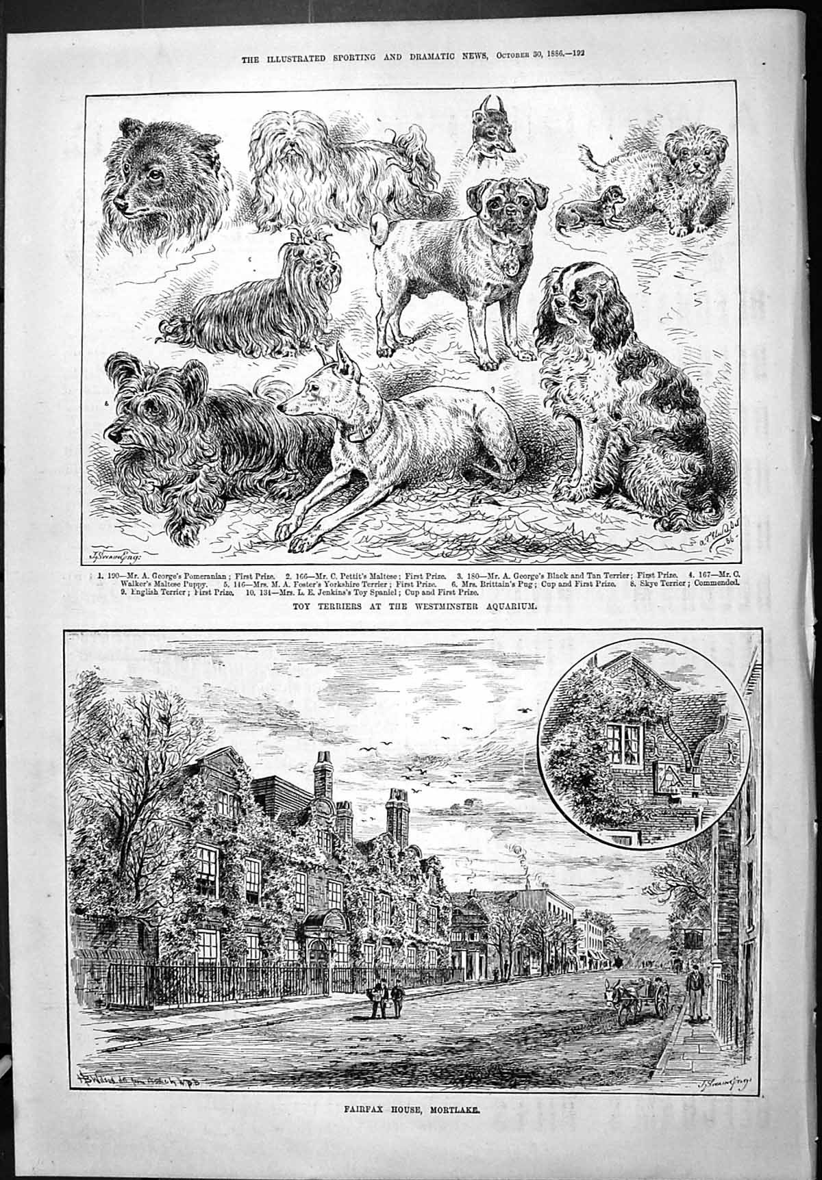 [Print 1886 Toy Terriers Dog Westminster Aquarium Fairfax House Mortlake 192J426 Old Original]