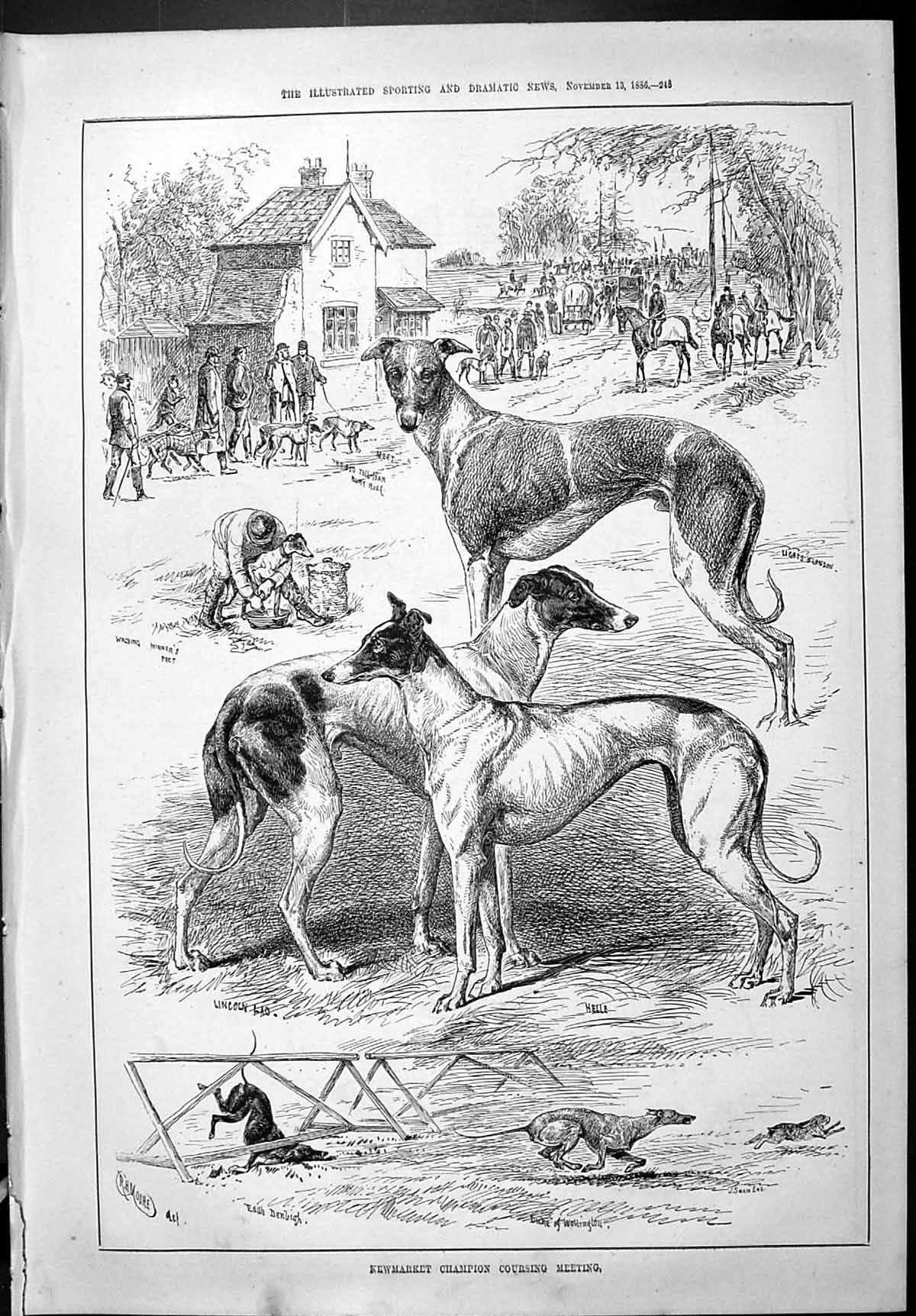 [Print 1886 Newmarket Champion Hare Coursing Greyhounds Dogs Lincoln Lad 245J426 Old Original]