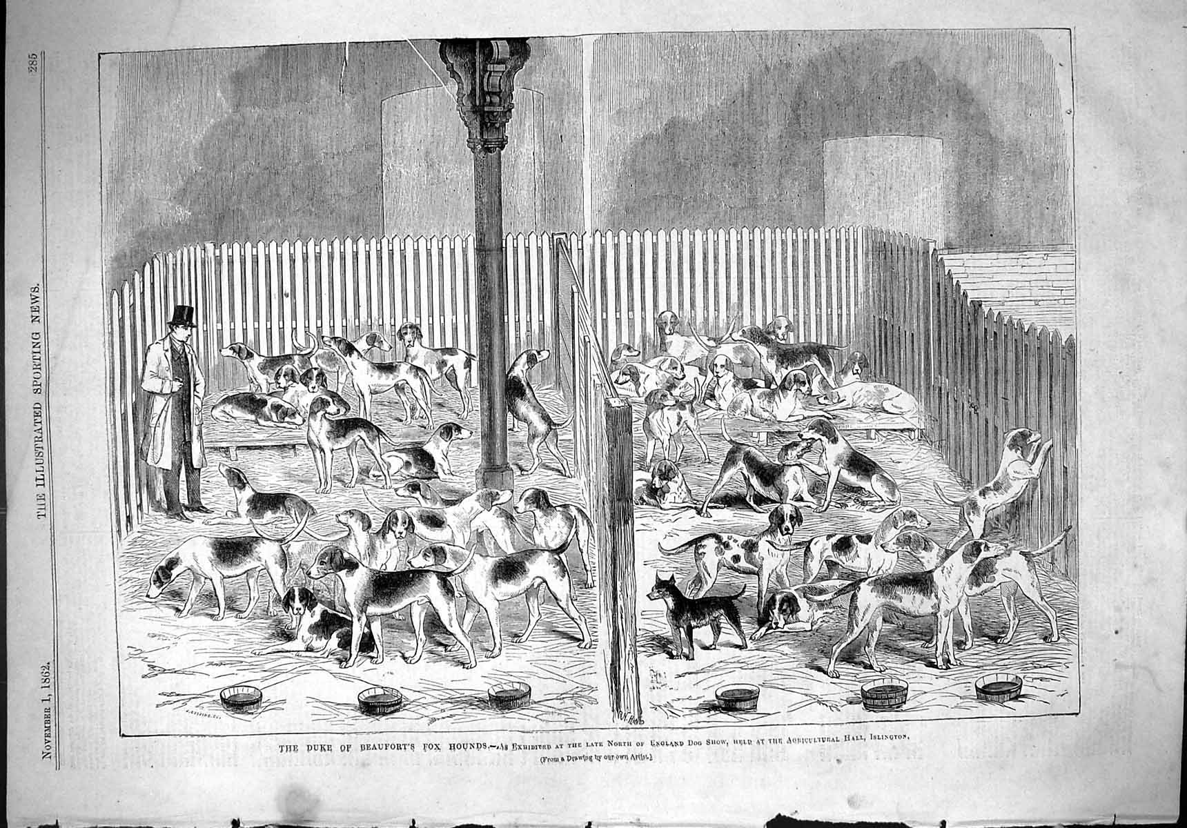 [Print 1862 Duke Beaufort Hounds England Dogs Show Agricultural Hall Isl 285J501 Old Original]