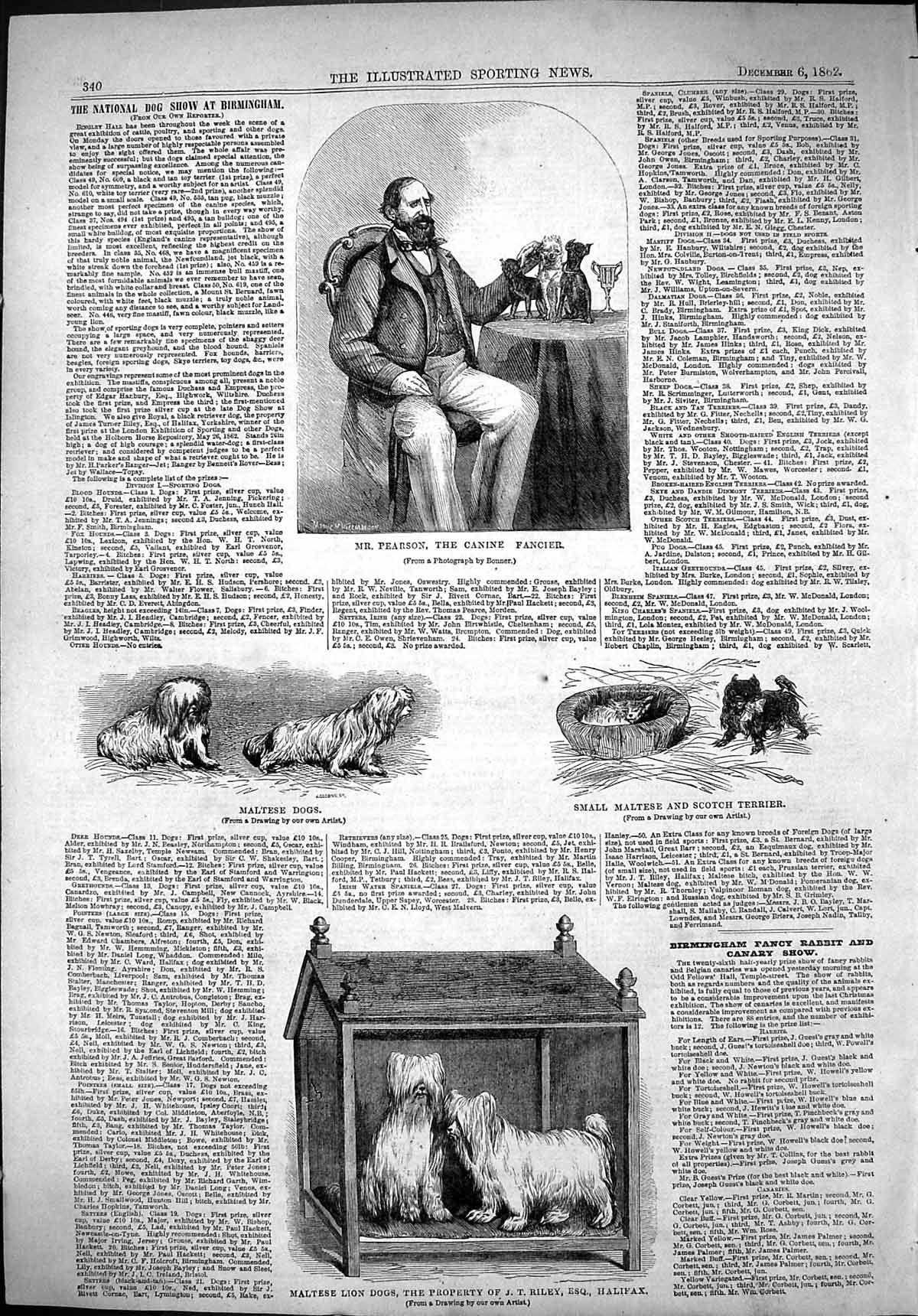 [Print 1862 Pearson Canine Fancier Maltese Lion Dogs Riley Scotch Terrie 340J501 Old Original]