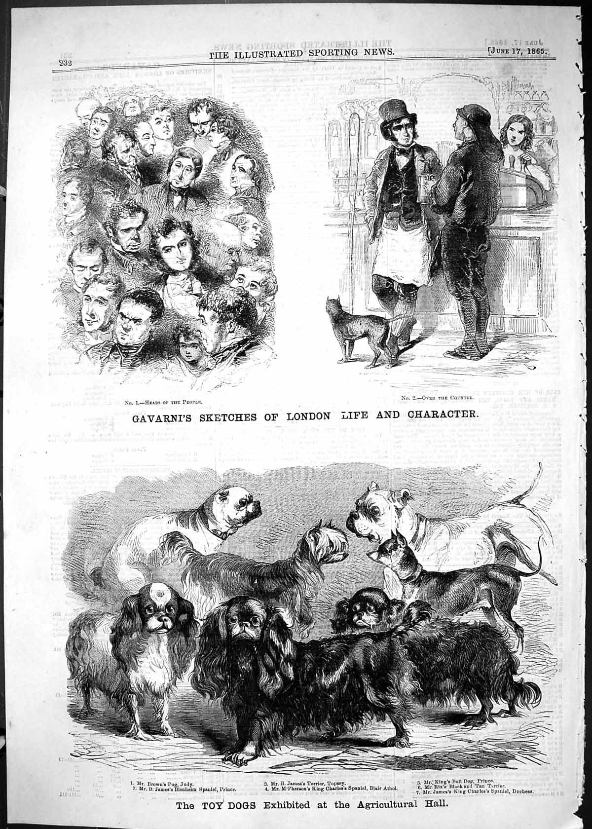 [Print 1865 Toy Dogs Agricultural Hall Pug Brown King Prince Blair Athol 232J504 Old Original]