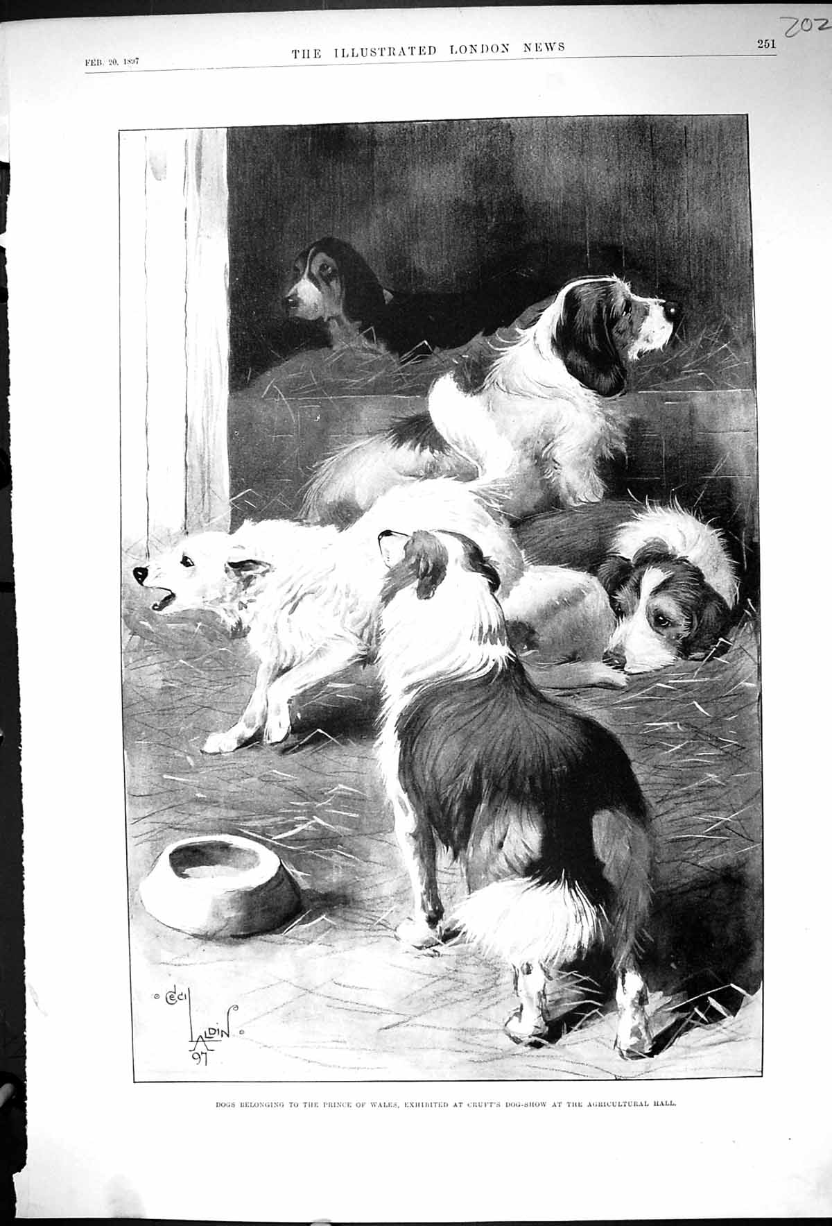 [Print 1897 Dogs Prince Wales Crufts Dog Show Agricultural Hall 202J507 Old Original]