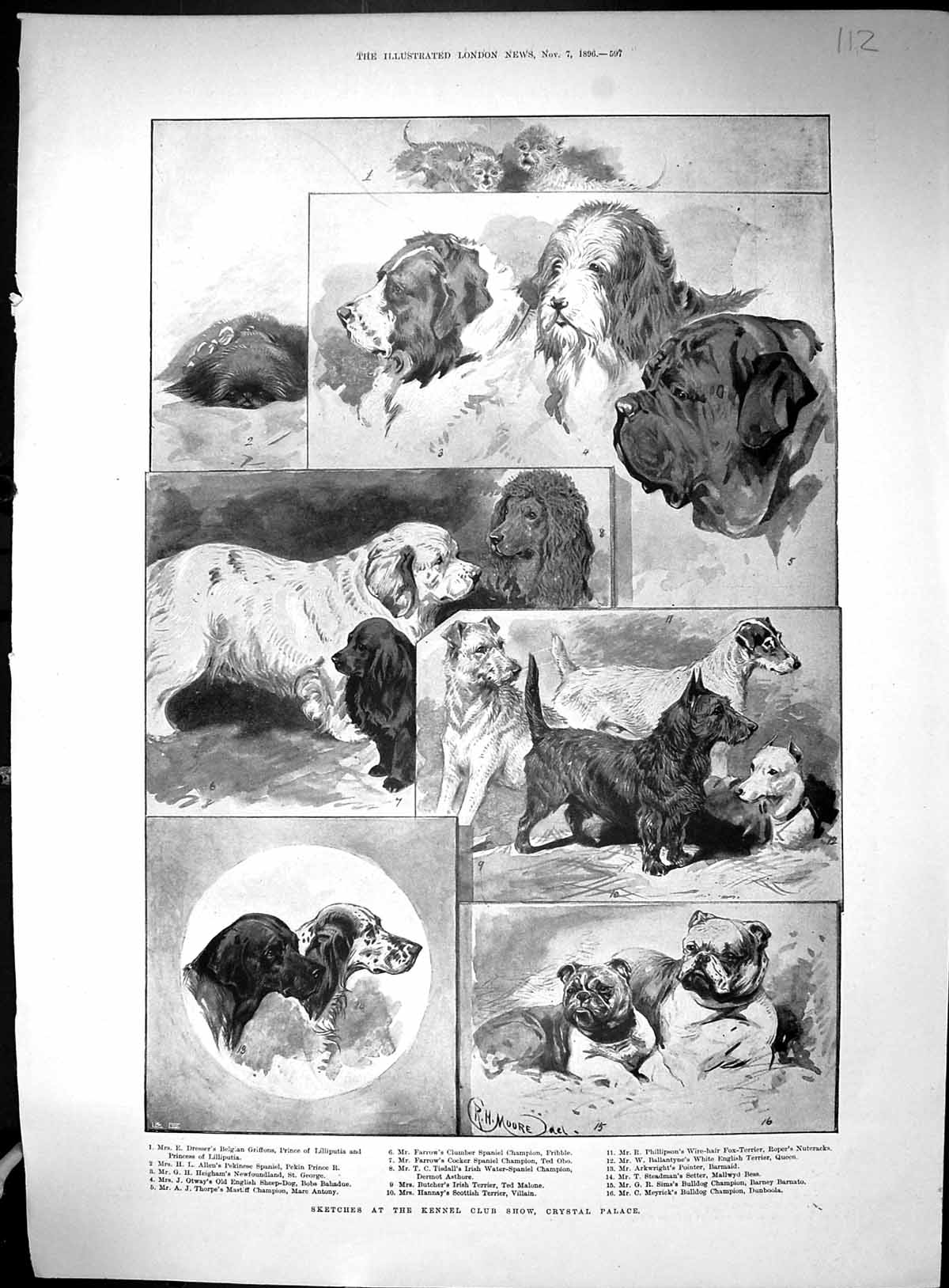 [Print 1896 Kennel Club Dog Show Crystal Palace Mrs Mckinley House Canto 112Rj513 Old Original]
