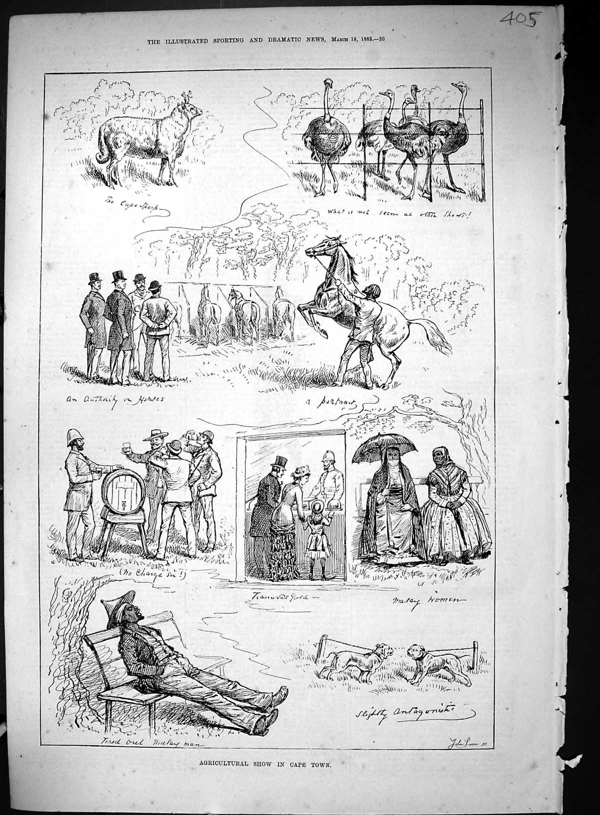 [Print 1882 Agricultural Show Cape Town Africa Animals 405J514 Old Original]