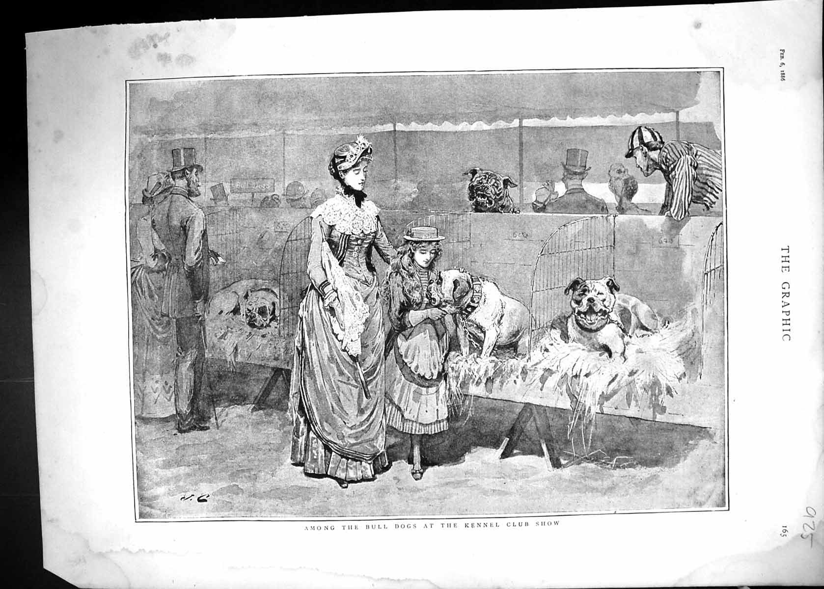 [Print 1886 Bull Dogs Kennel Club Show Owners Pets Animals 925J515 Old Original]