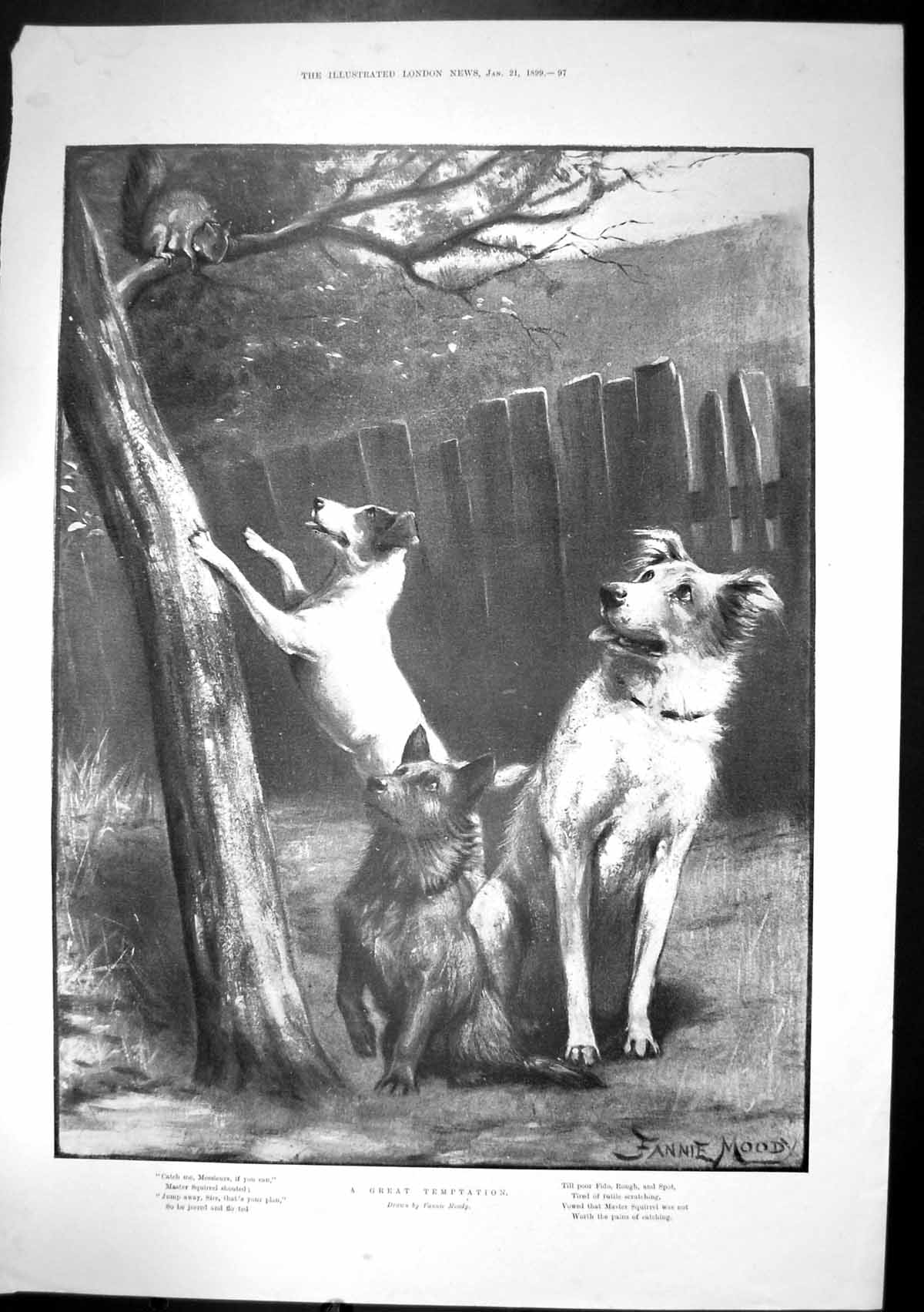 [Print Great Temptation Fannie Moody Squirrel Tree Dogs 1899 213J683 Old Original]