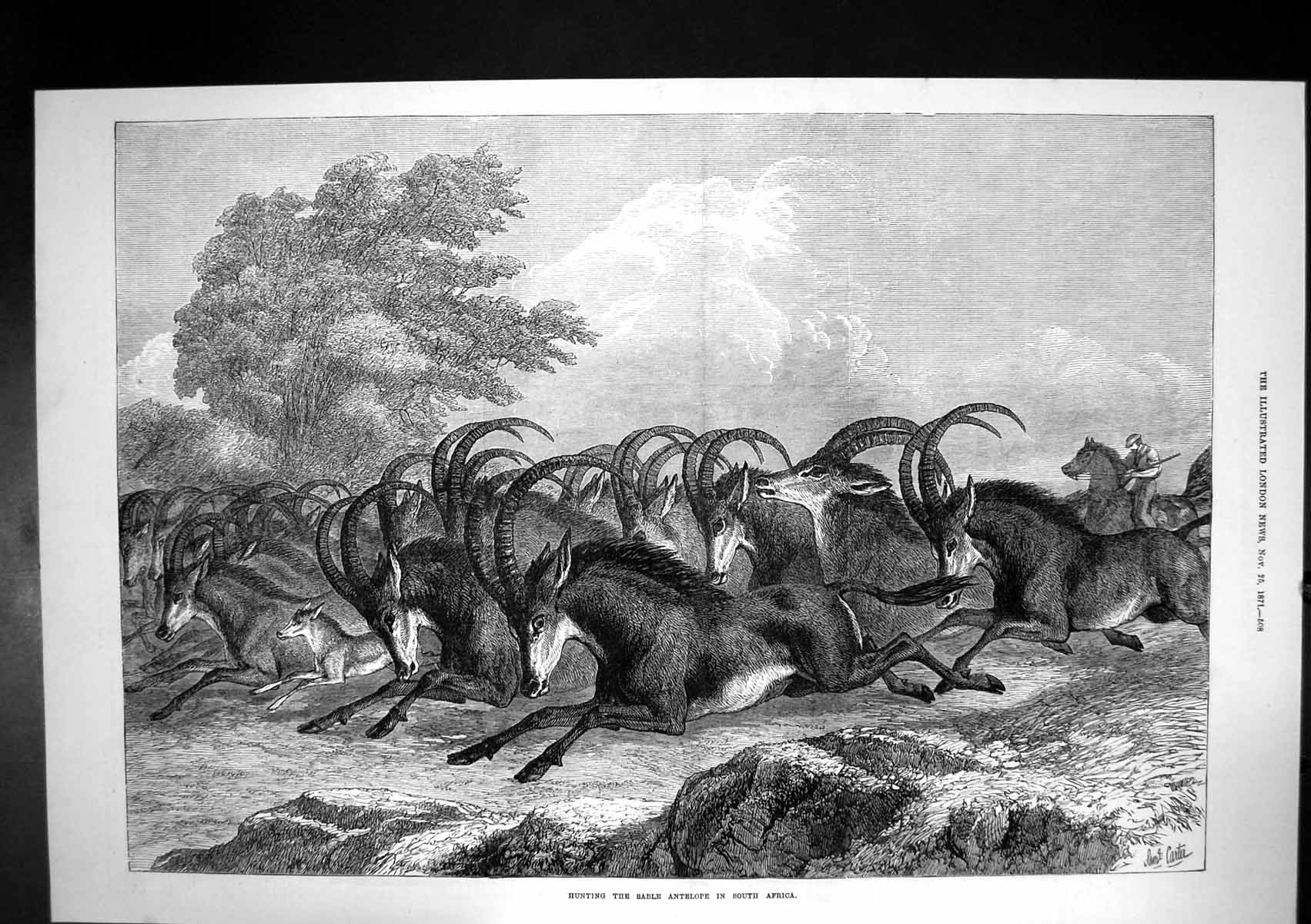 [Print Hunting Sable Antelope South Africa 1871 217J683 Old Original]