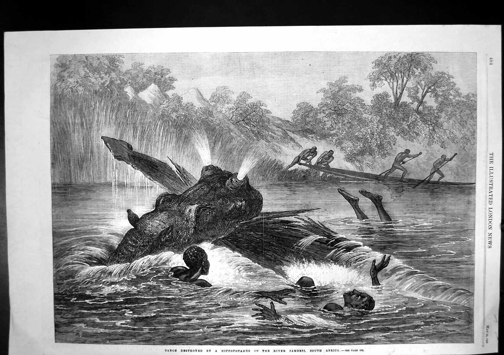 [Print Canoe Destroyed Hippopotamus River Zambesi South Africa 1866 271J683 Old Original]