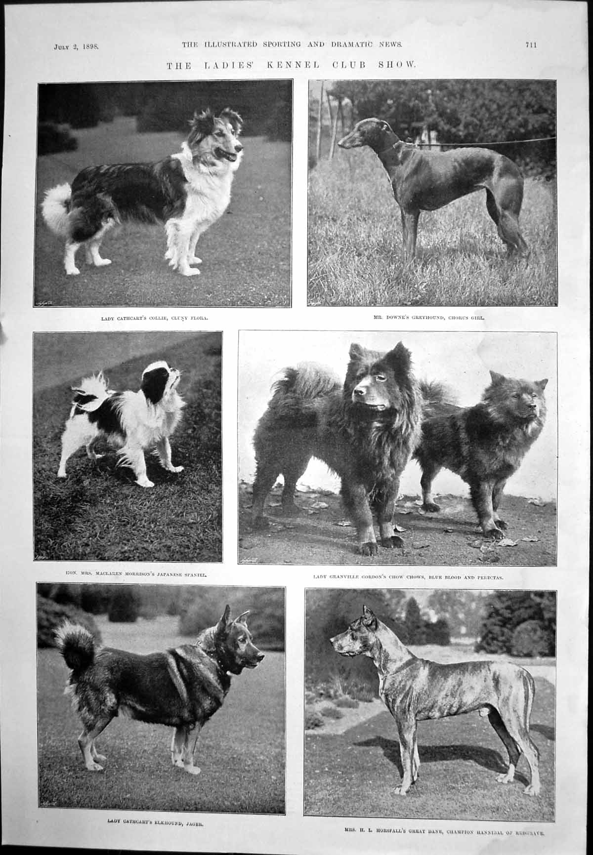 [Print Ladies' Kennel Club Show Dogs Haigh Yorkshire Bowler Cricket 1898 173J705 Old Original]