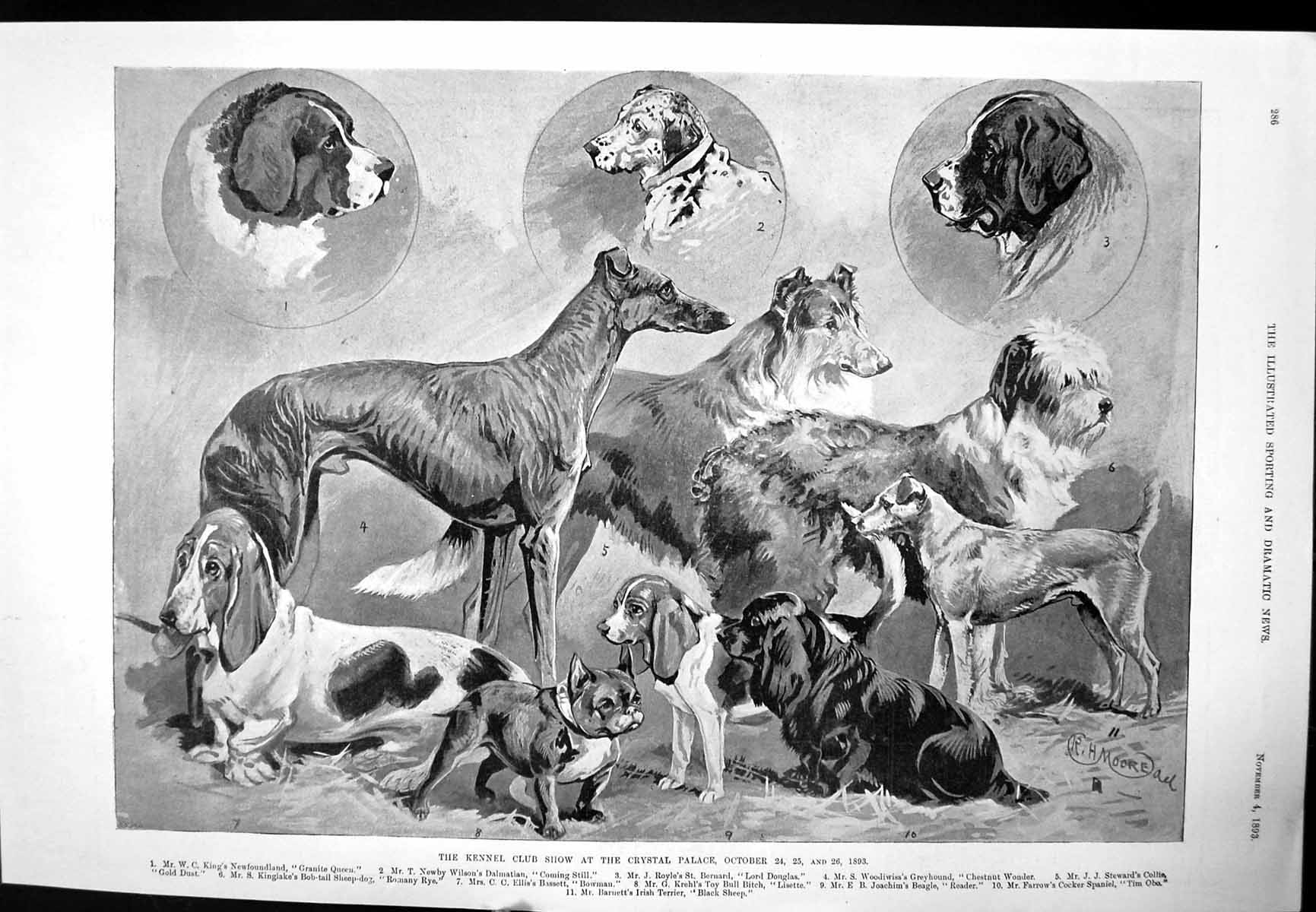 [Print Kennel Club Show Crystal Palace Dogs Challenge Cup 1893 175J705 Old Original]