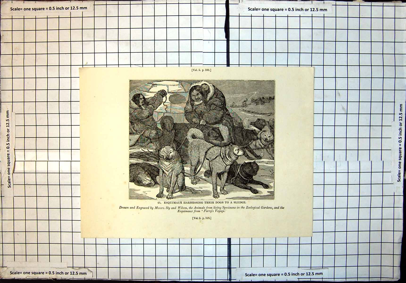 [Print Esquimaux Harnessing Their Dogs To Sledge Messrs Sly Wilson 495J712 Old Original]