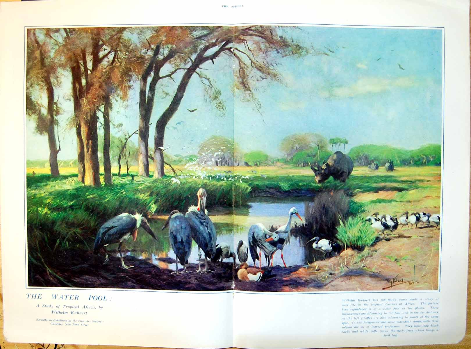 [Print Water Pool Tropical Africa W Kuhnert Storks Rhinoceroses 438J719 Old Original]
