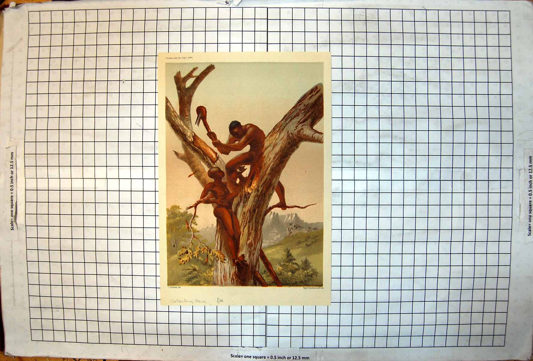 [Print Natives Tree Collecting Honey Traditional Tool Wood Bowl Africa 118J720 Old Original]