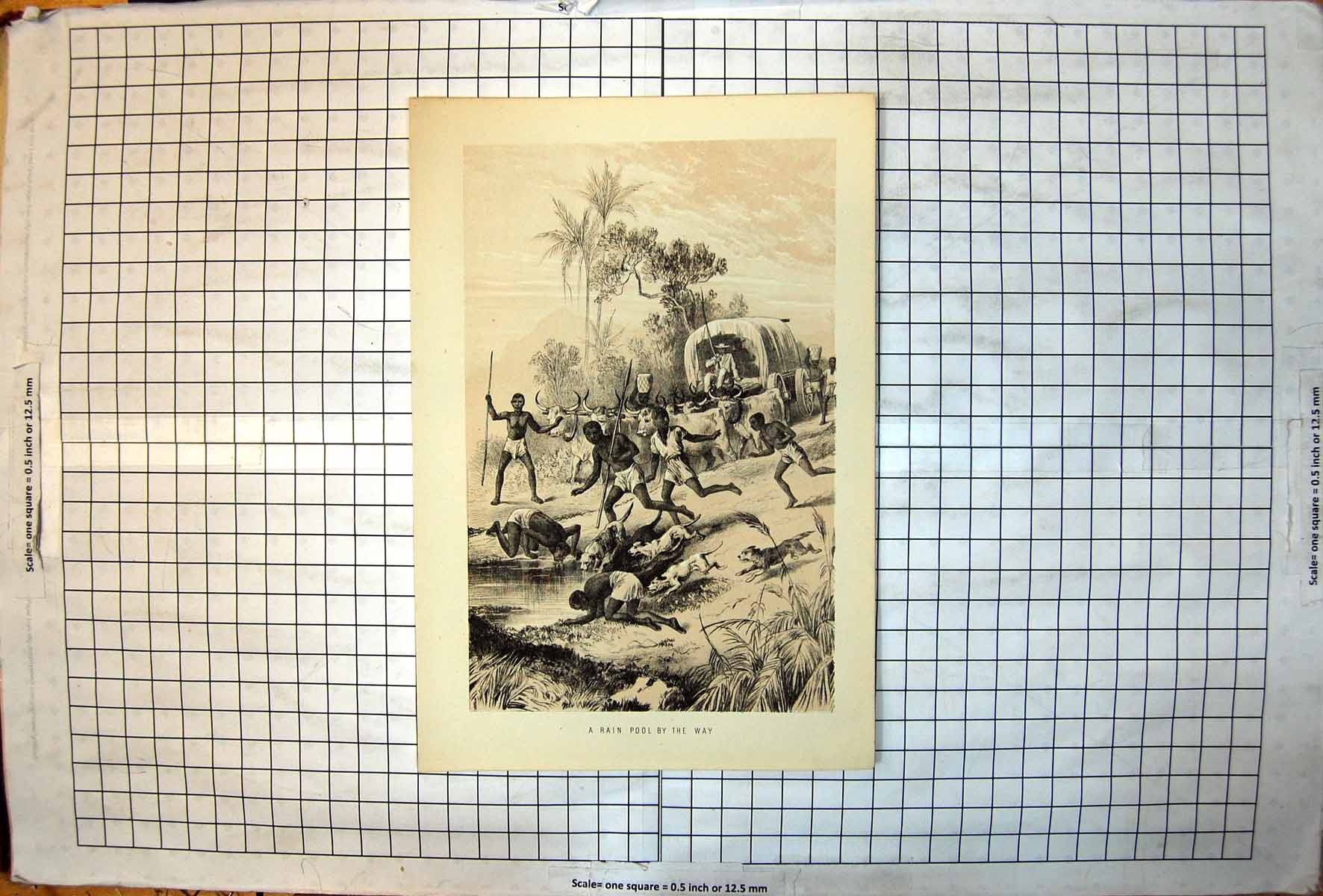 [Print Rain Pool Africa Men Drinking Dogs Cattle Pulling Ox Wagon 405J720 Old Original]