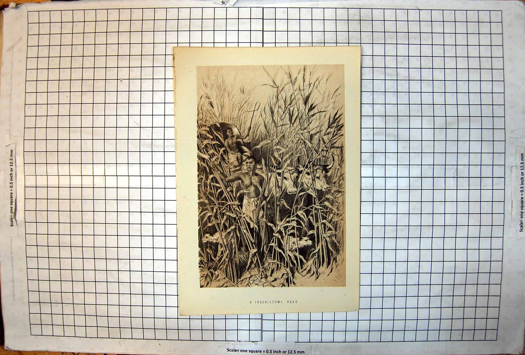 [Print Troublesome Road Leading Ox Wagon Through Tall Grasses Dog 409J720 Old Original]