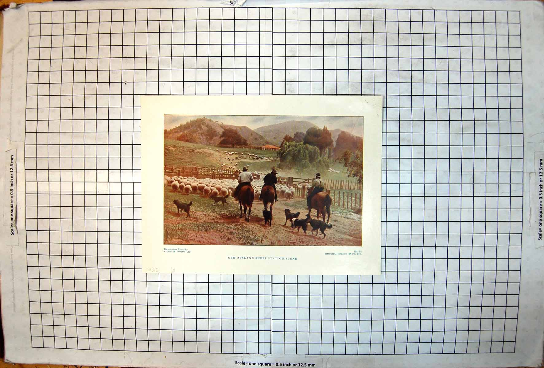 [Print New Zealand Sheep Station Scene Horses Dogs Rounding Up 1928 419J720 Old Original]