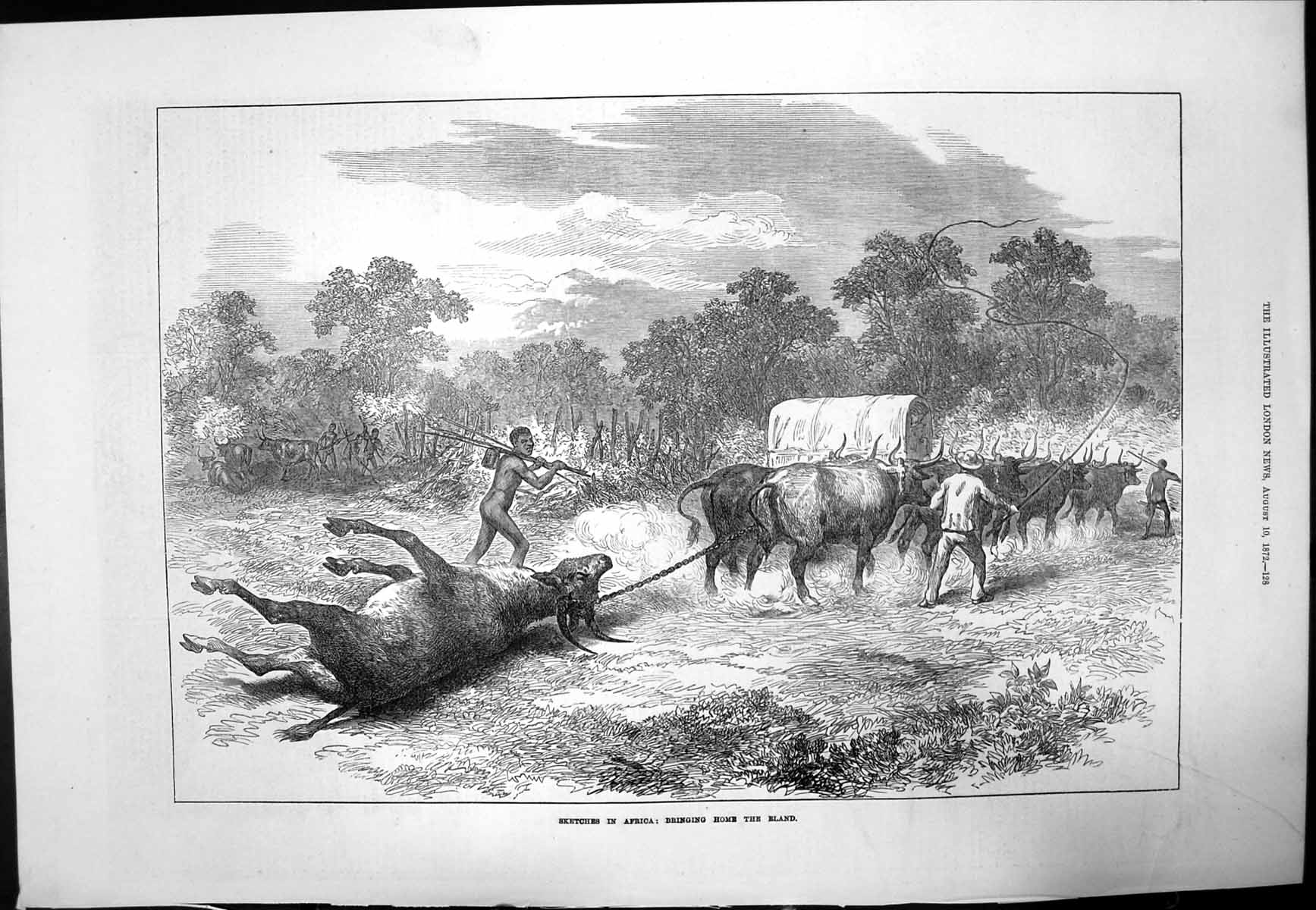 [Print Sketch Africa Bringing Home Eland Natives Spears 1872 431J728 Old Original]