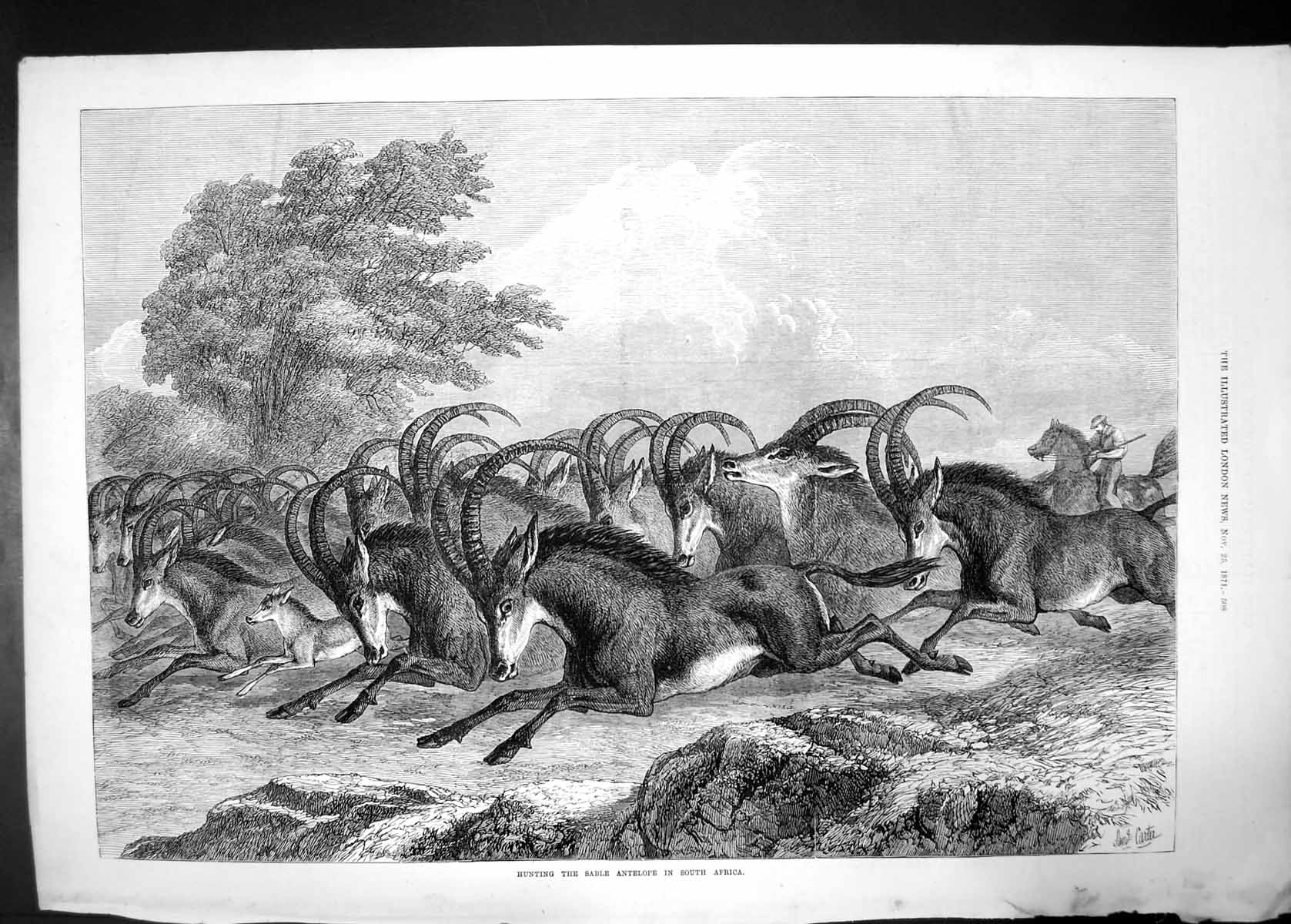 [Print Hunting The Sable Antelope South Africa 1871 Running Horns 284J730 Old Original]