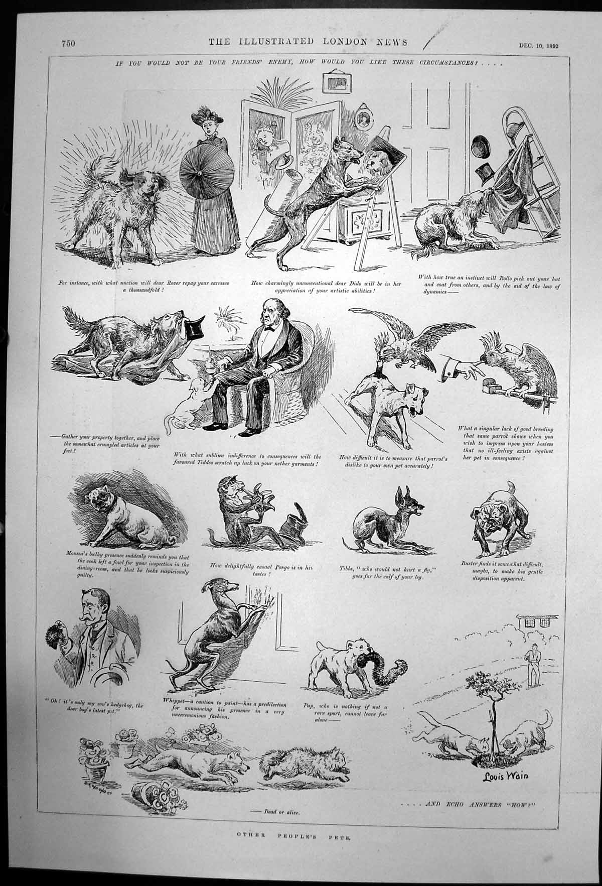 [Print Sketches Other Peoples Pets Cats Dogs Parrot Monkey 1892 626J731 Old Original]