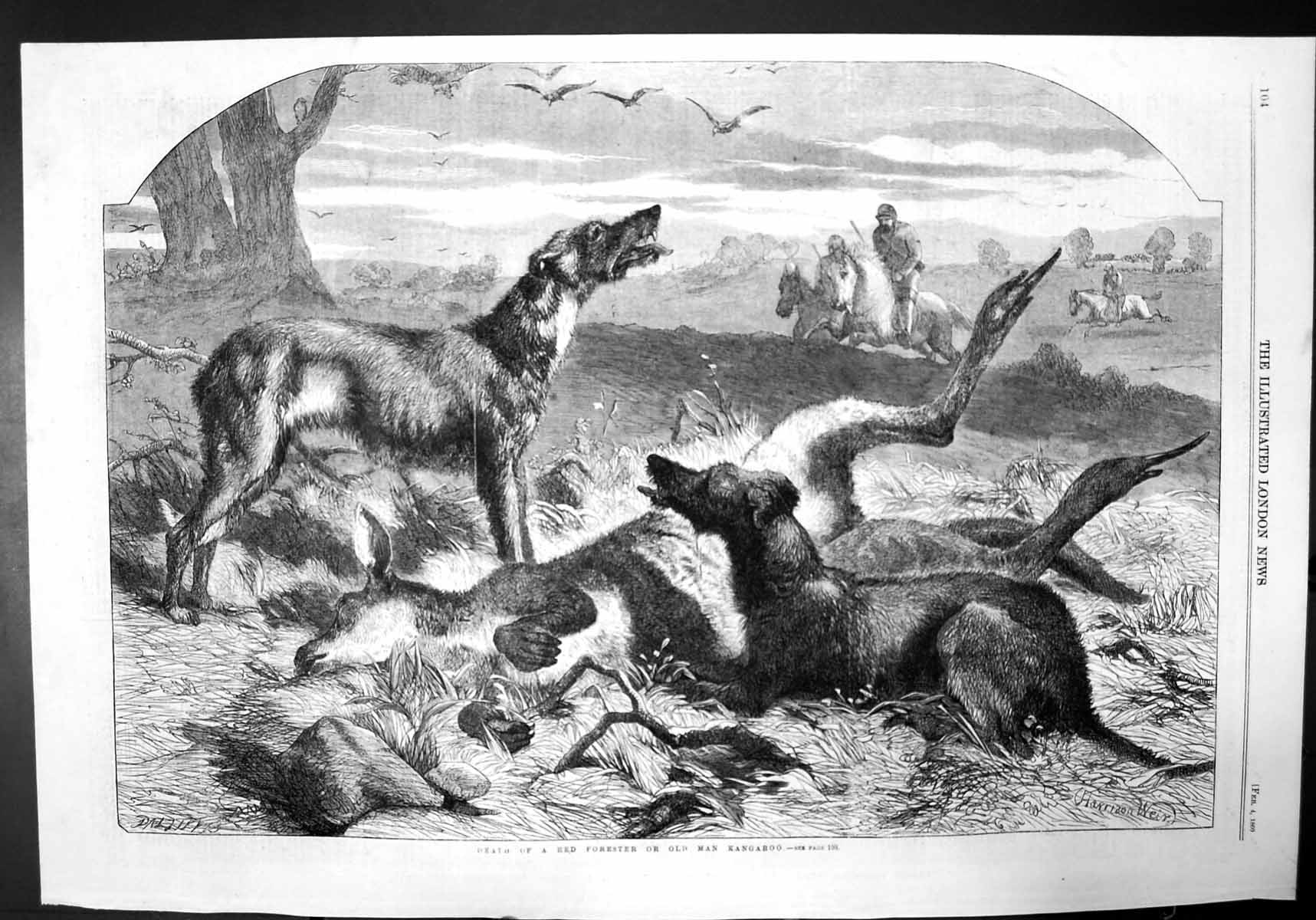 [Print Death A Red Forester Or Man Kangaroo Dogs Hunting 1860 819J732 Old Original]