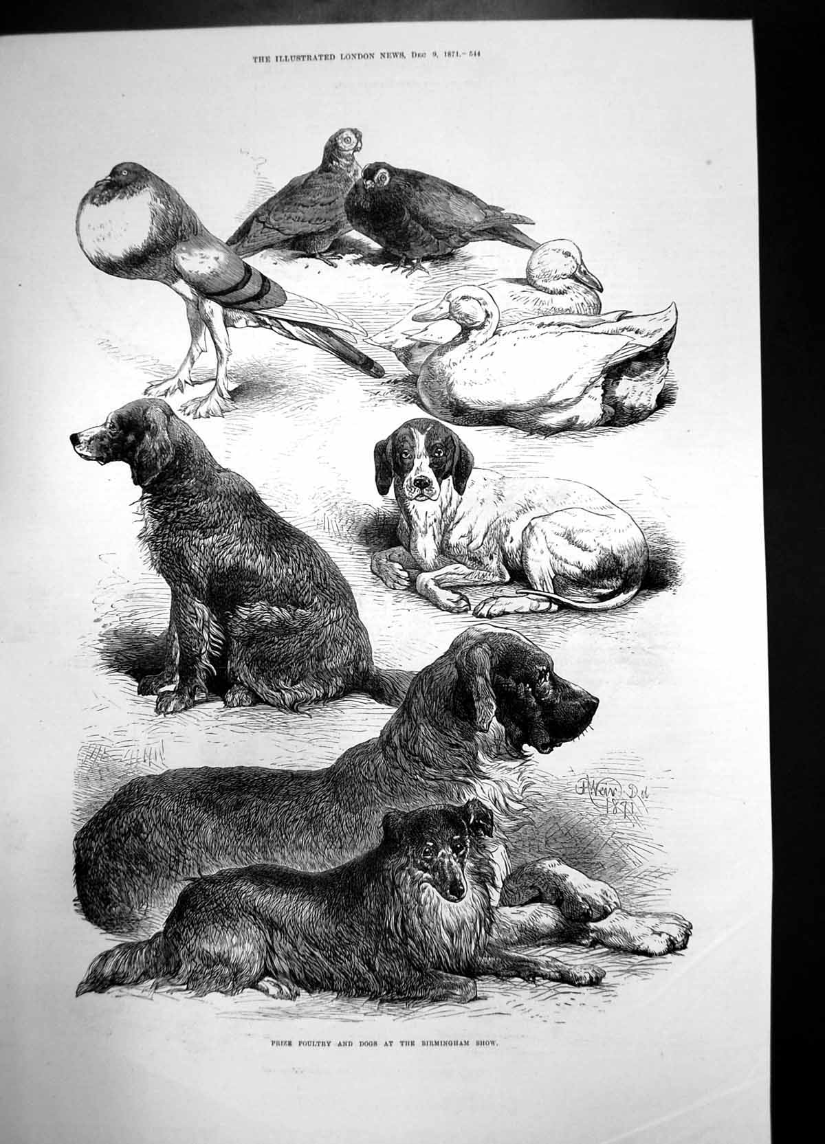 [Print Prize Poultry And Dogs Birmingham Show 1871 Birds Curzon Hall 865J735 Old Original]
