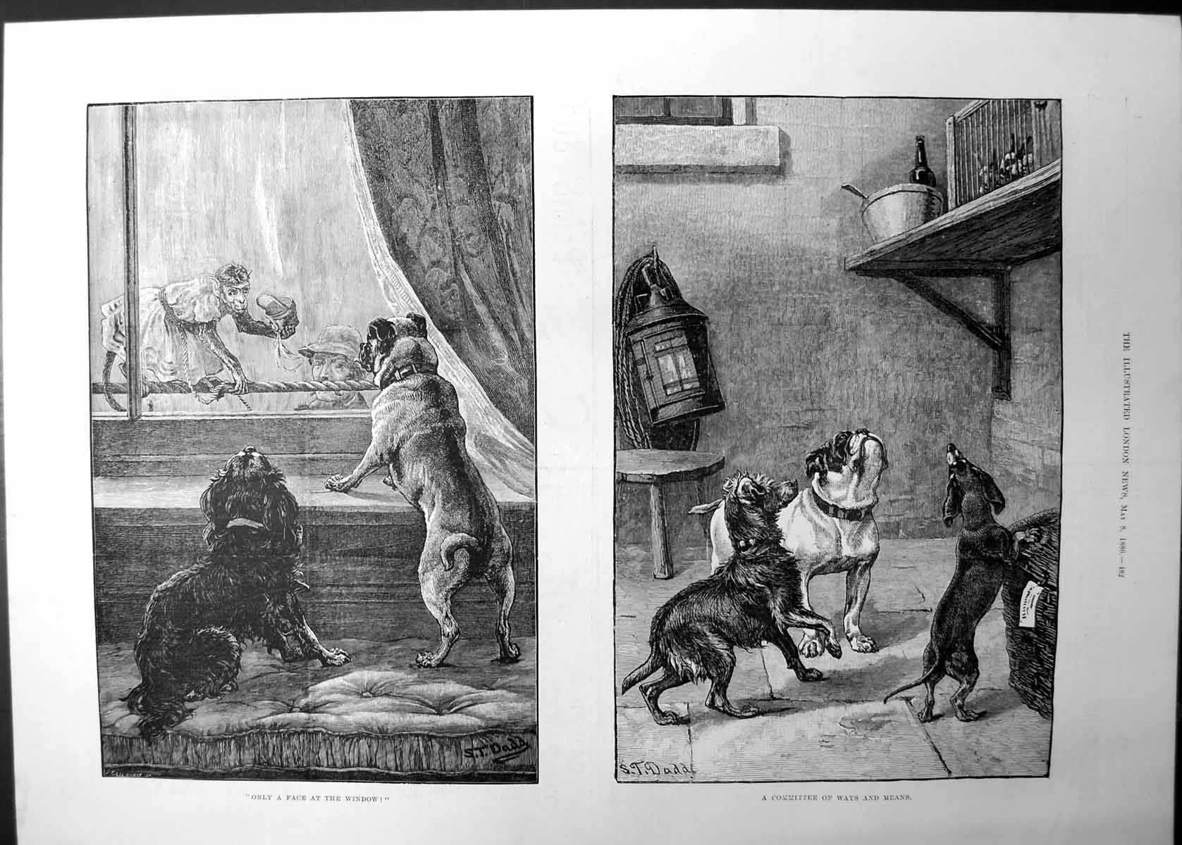 [Print Only A Face At Window Committee Ways And Means Dogs 1886 104J736 Old Original]