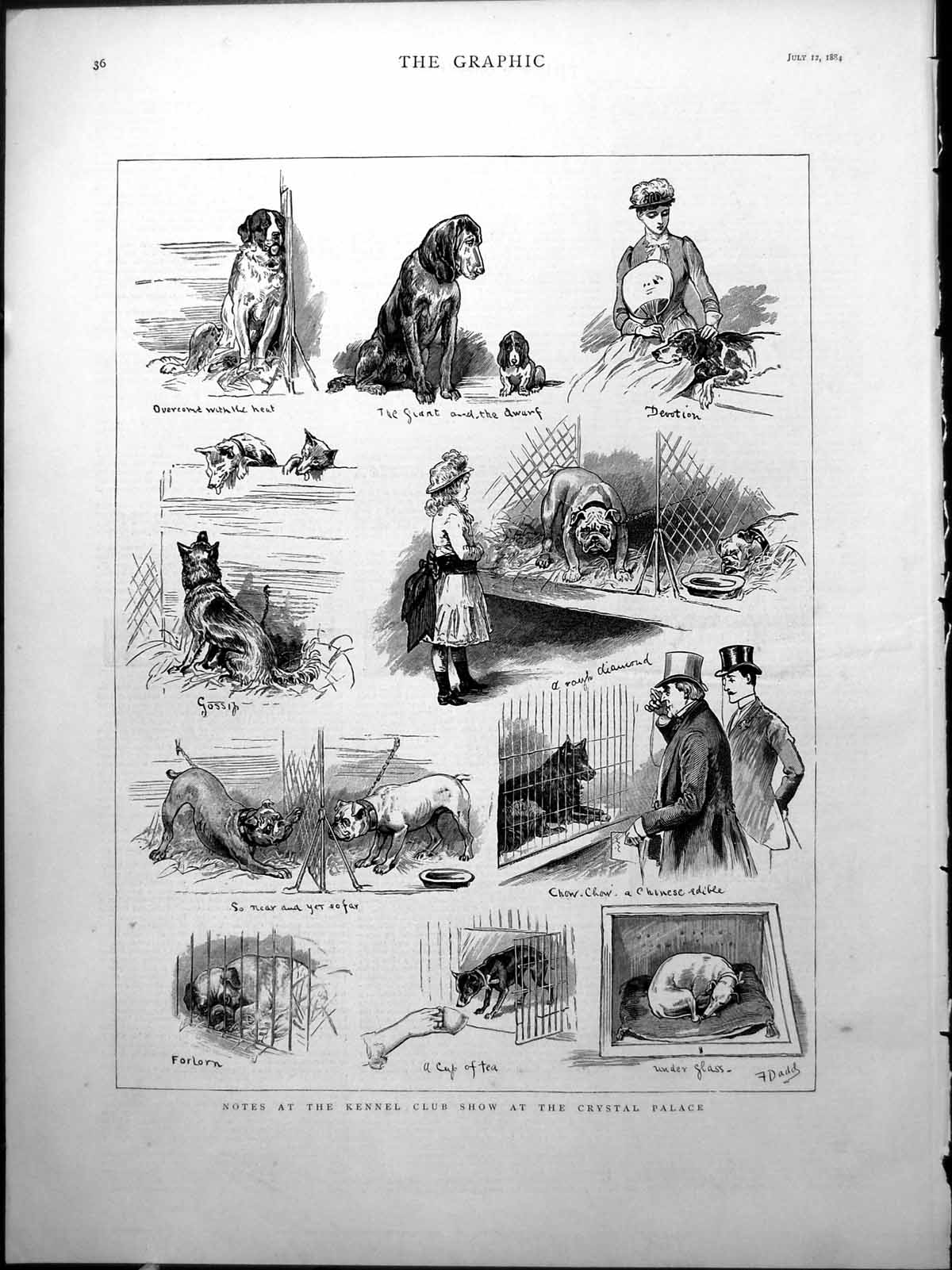 [Print Notes Kennel Club Show Crystal Palace Dogs Large Small F. Dadd 18 788J776 Old Original]