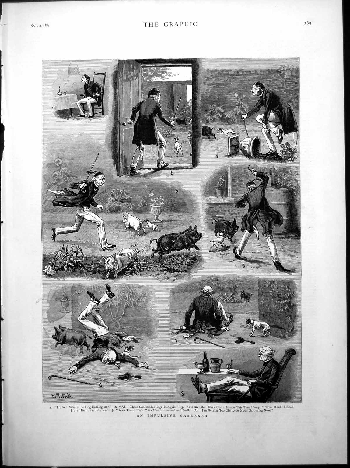 [Print Impulsive Gardener Harassed Pigs Dog Comic Sketches Damage 1884 889J776 Old Original]