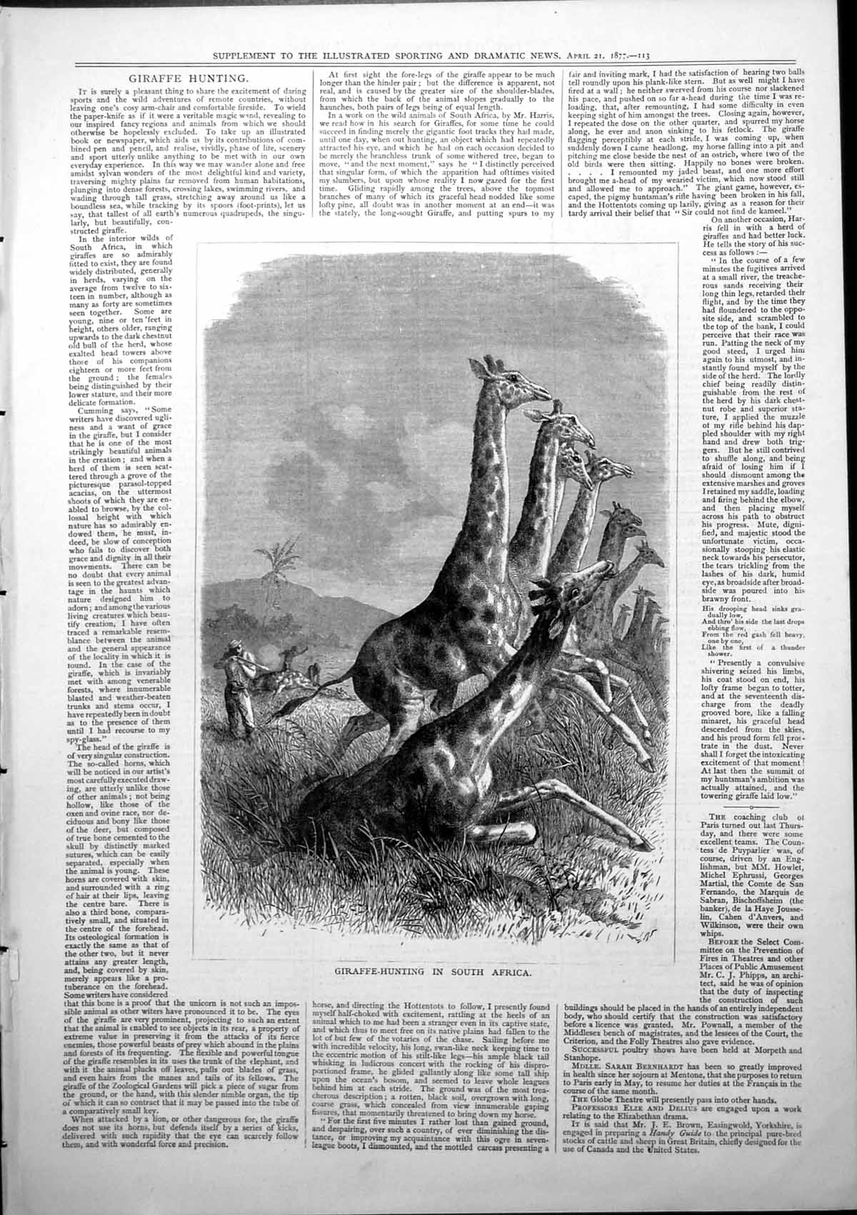 [Print Giraffe Hunting South Africa Firing Gun 1877 730J779 Old Original]