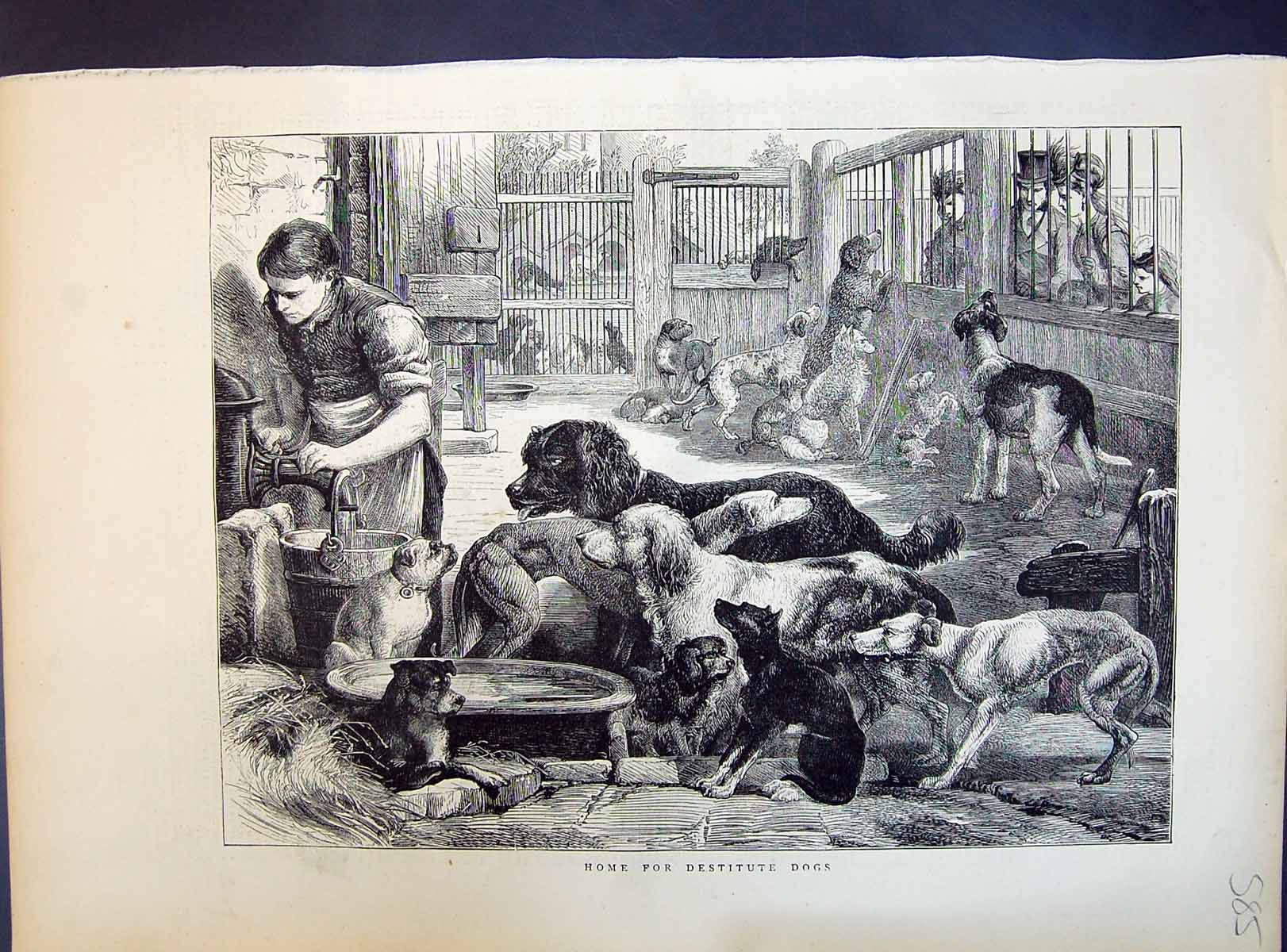 [Print 1871 Interior Home Destitute Dogs Pets Water Feeding Time 585M104 Old Original]