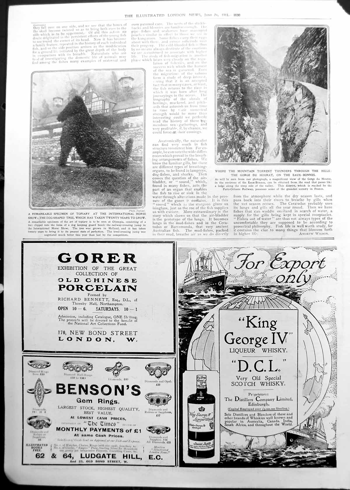 [Print Topiary Dog International Horse Show Gorge Du Hourat 1911 1030P2380911 Old Original]