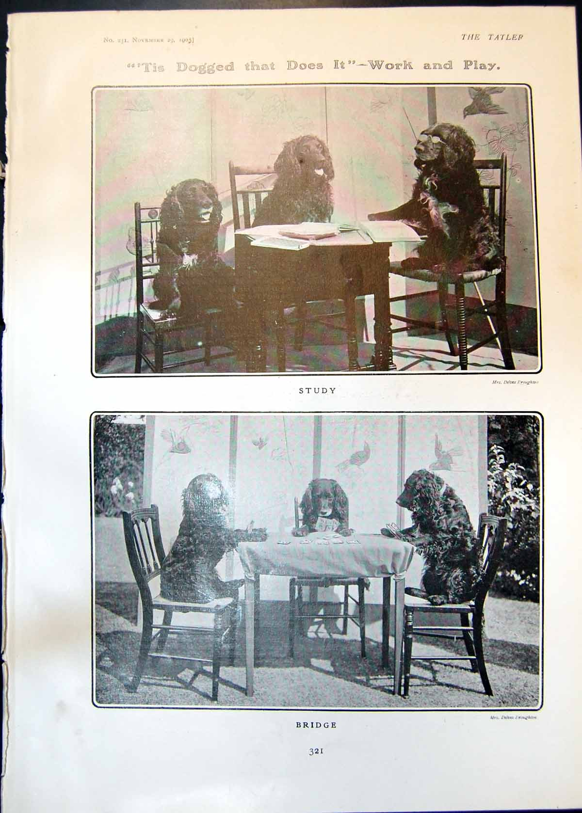 [Print Tis Dogged Does It Work Play Three Dogs Study Bridge 1905 321Q018 Old Original]