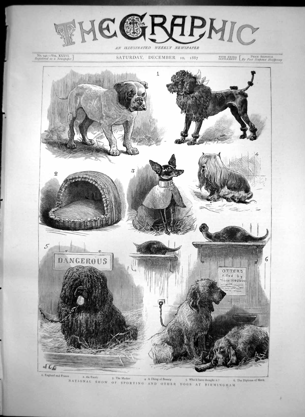 [Print National Show Sporting Other Dogs Birmingham 1887 247T111 Old Original]