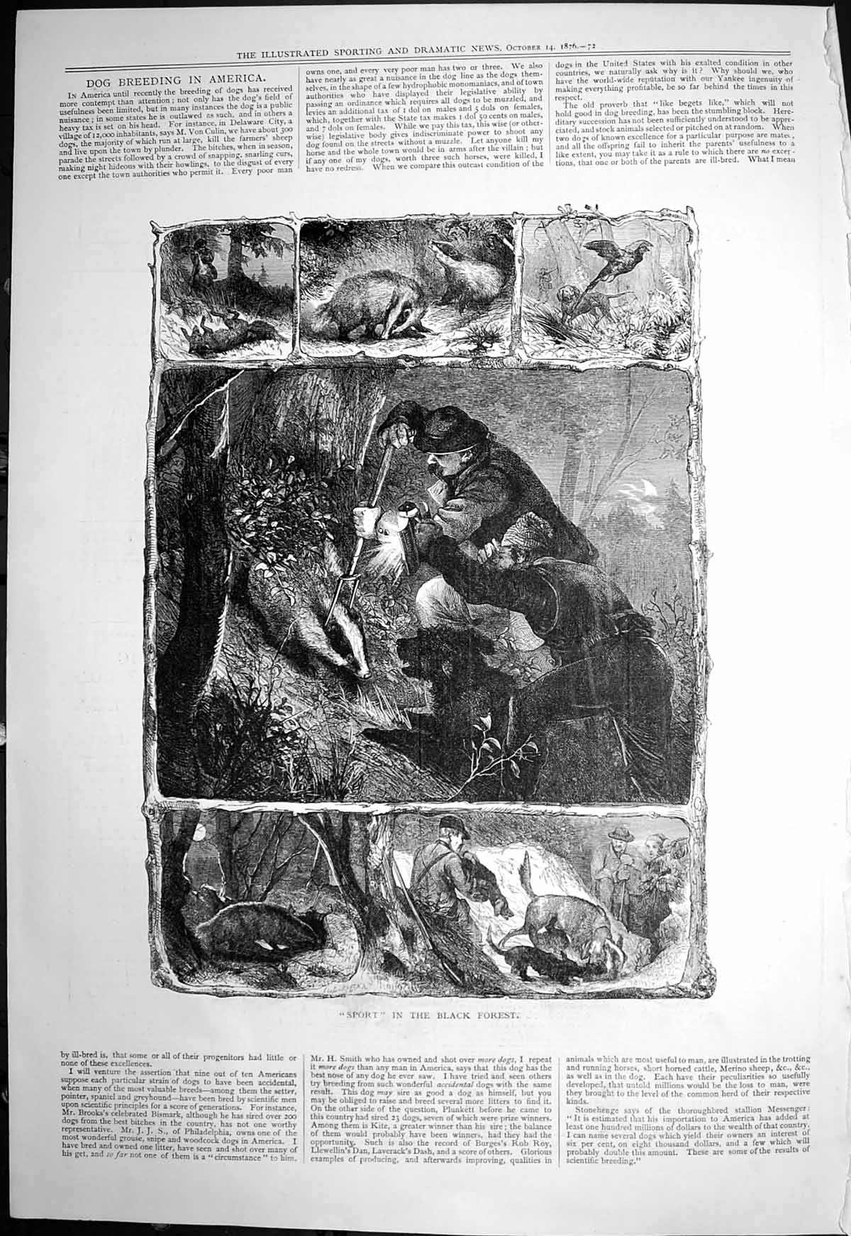 [Print Sport Black Forest Catching Badgers Night Dogs 1876 137T118 Old Original]