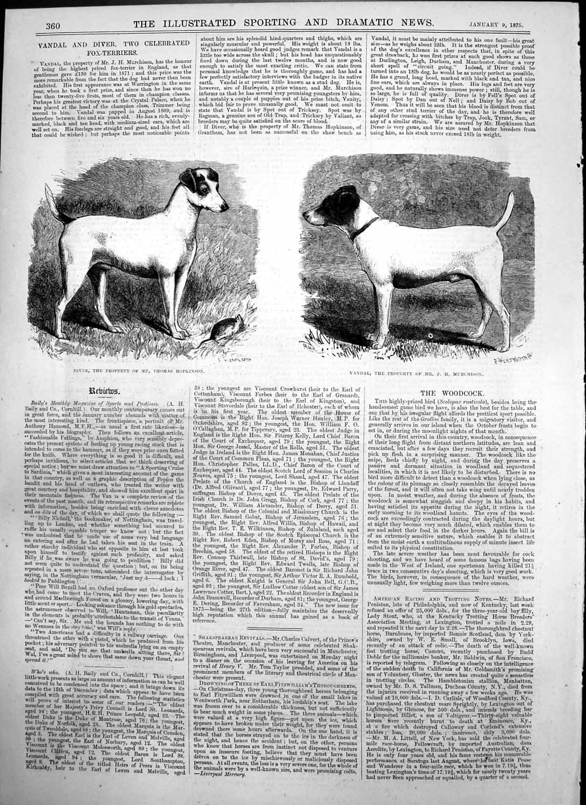 [Print Diver Dog Mp Thomas Hopkinson Vandal Dog Mr J H Murchison 1875 360T122 Old Original]