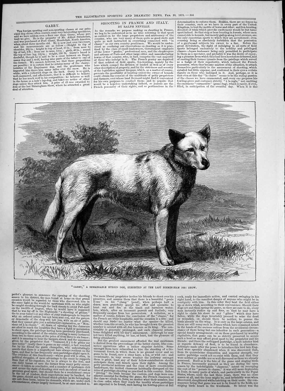[Print Garry Hybrid Dog Exhibited Birmingham Dog Show Tricks Whist 1875 504T122 Old Original]